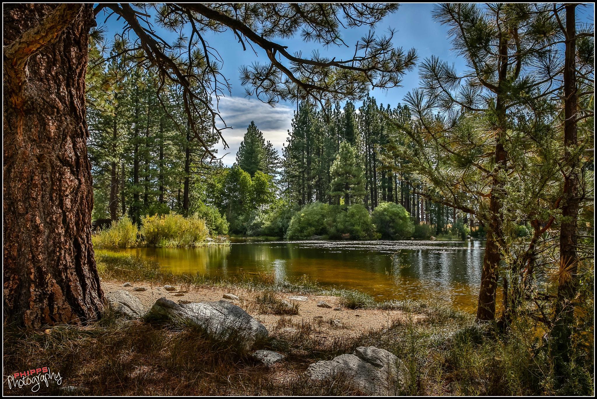 Davis Creek Pond... by PhippsPhotography