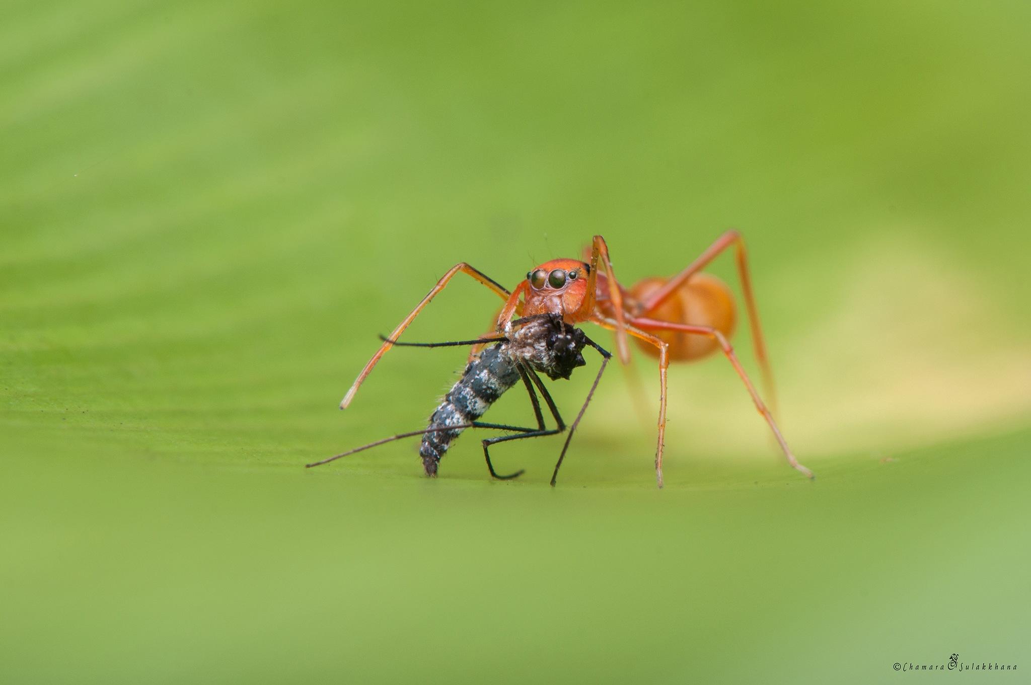Mosquito Killer by Sulakkhana Chamara