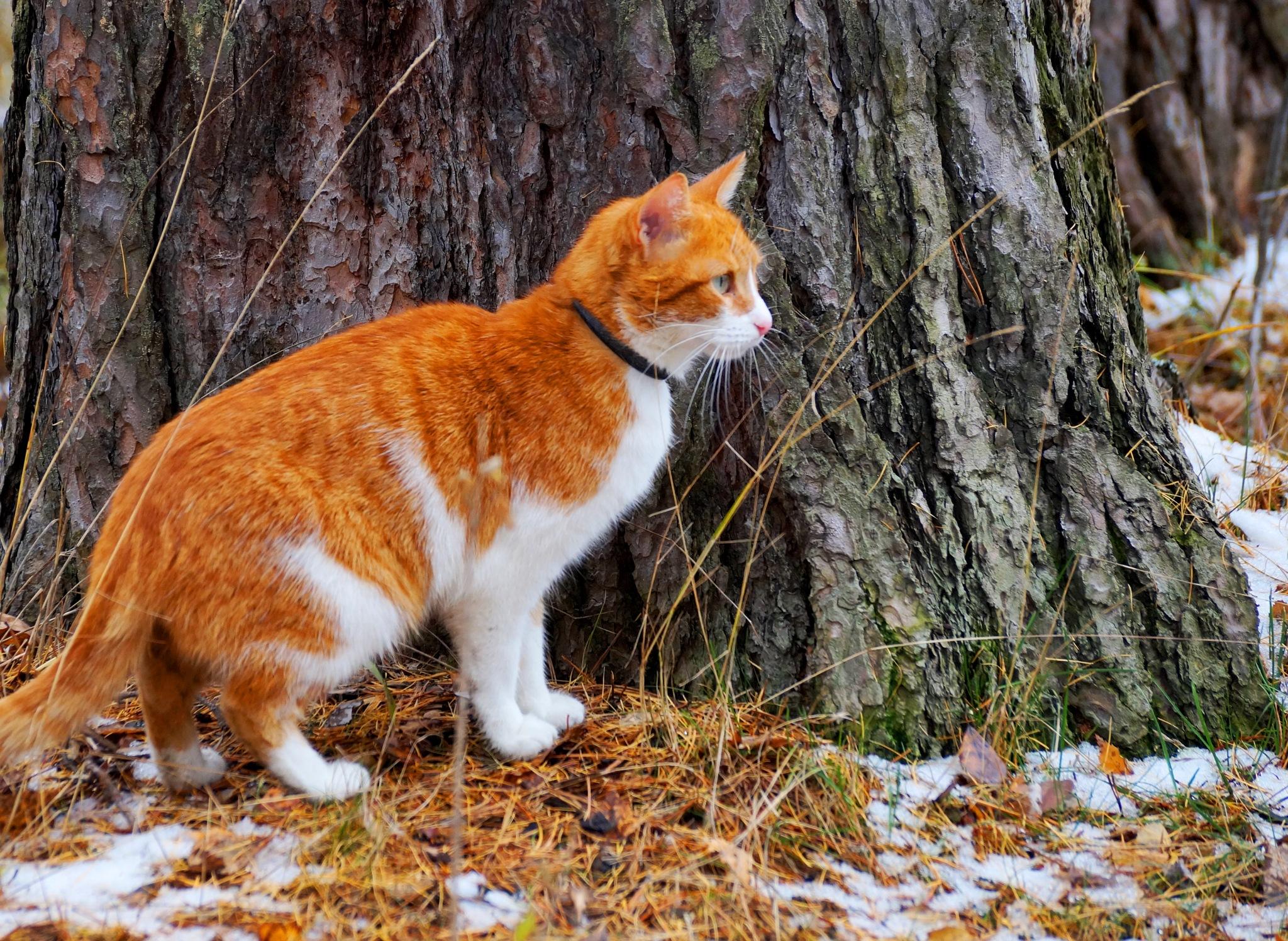 cat in October by Veronika  Parfenyuk