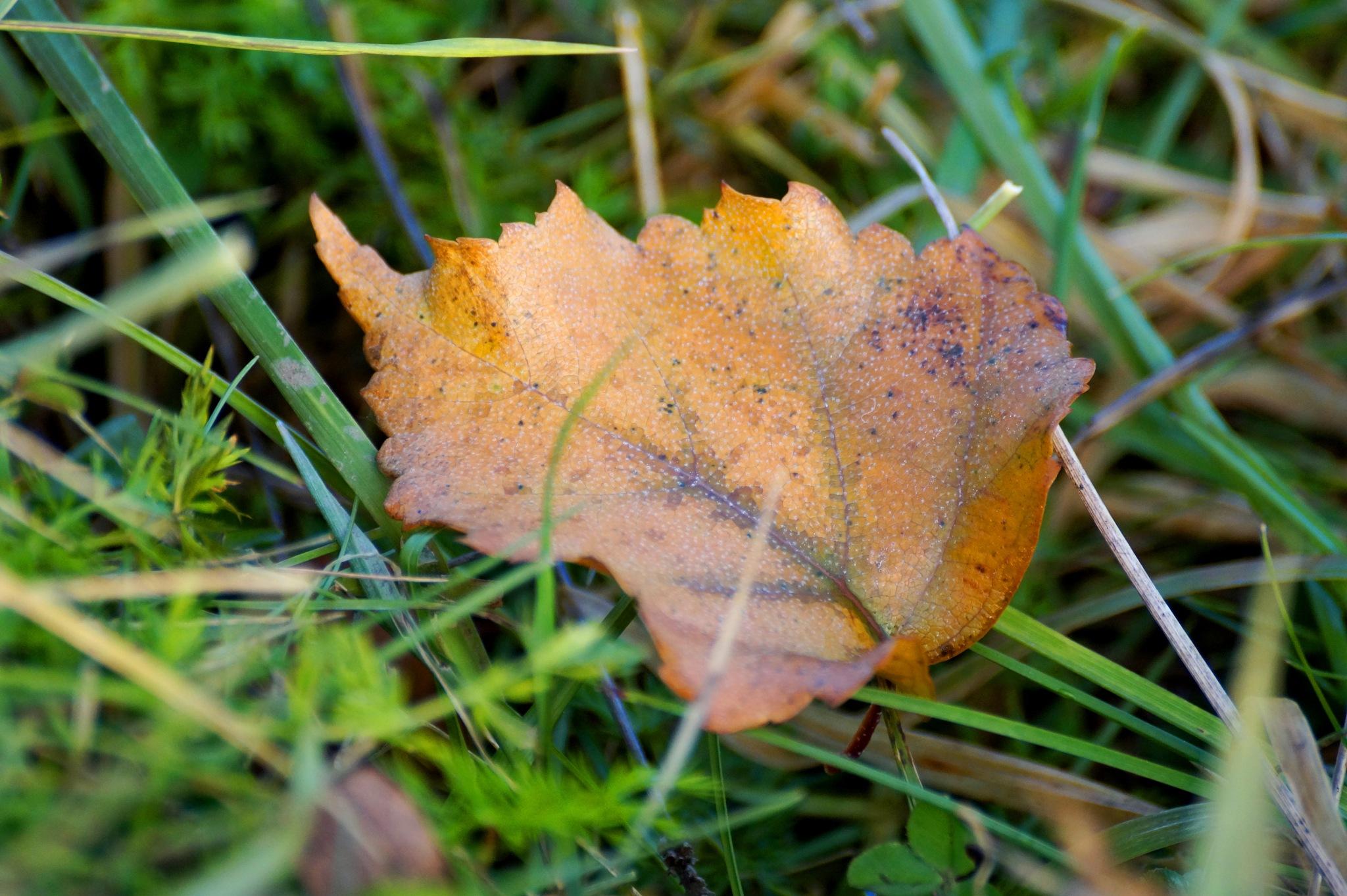 ellow sheet October by Veronika  Parfenyuk