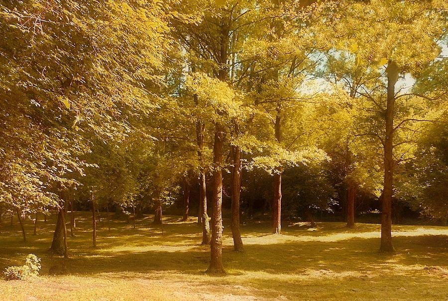 Trees by Gabriella