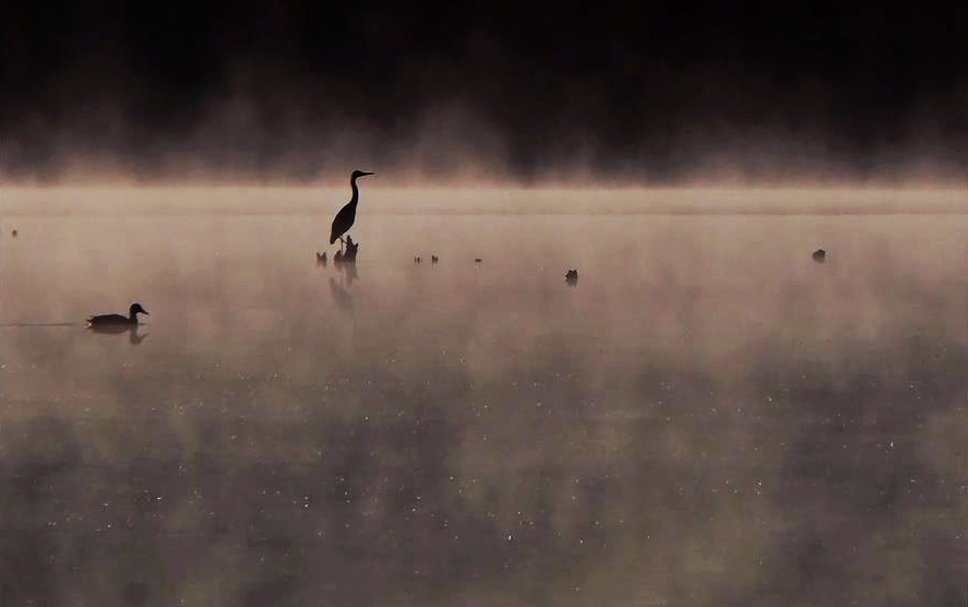 Birds in the morning by Gabriella
