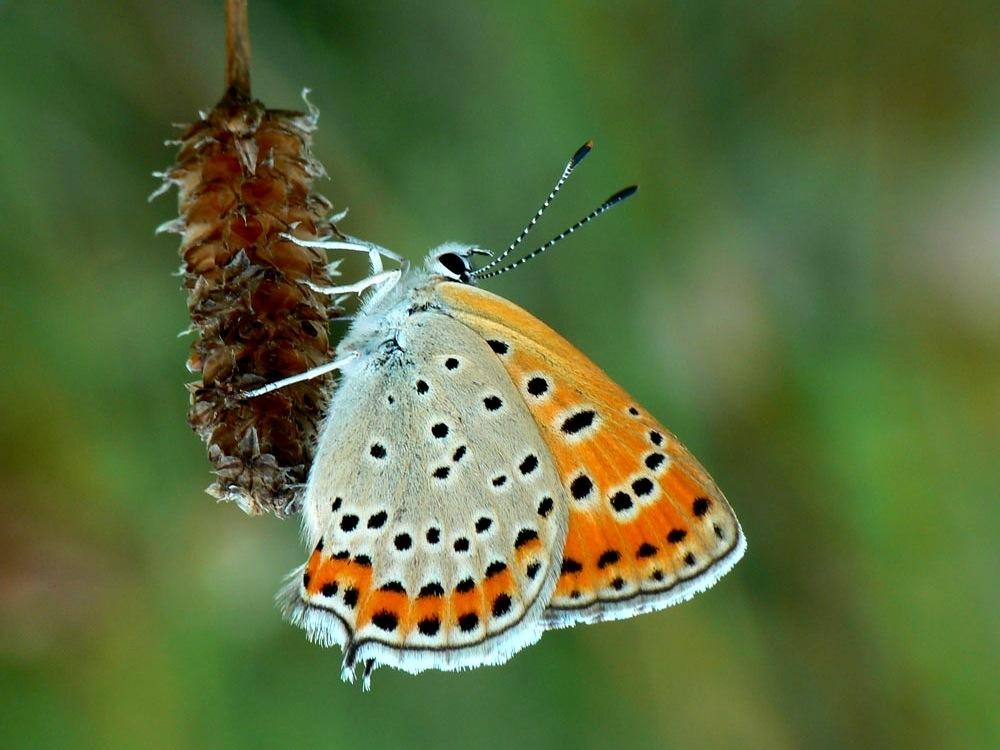 Butterfly by Gabriella