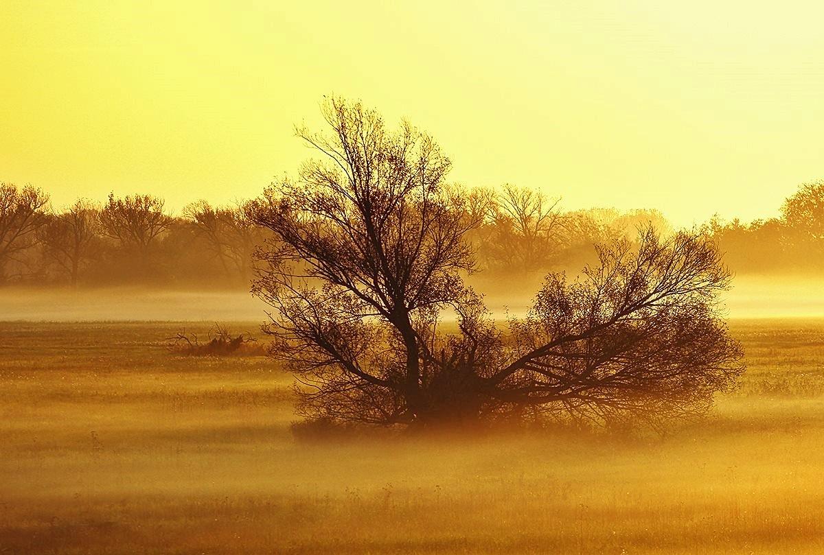 Landscape by Gabriella