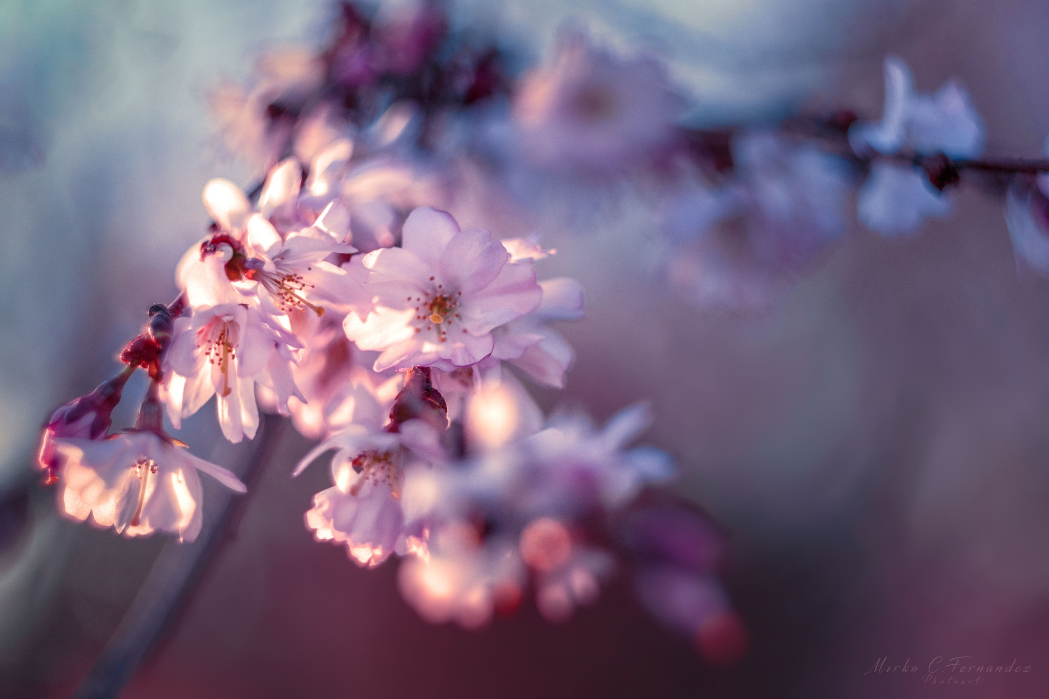 blossom in the sun 2 by Blicklinie