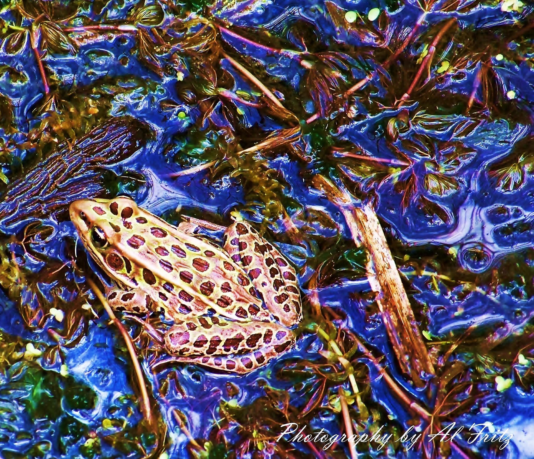 Frog in Blue by Allan Fritz
