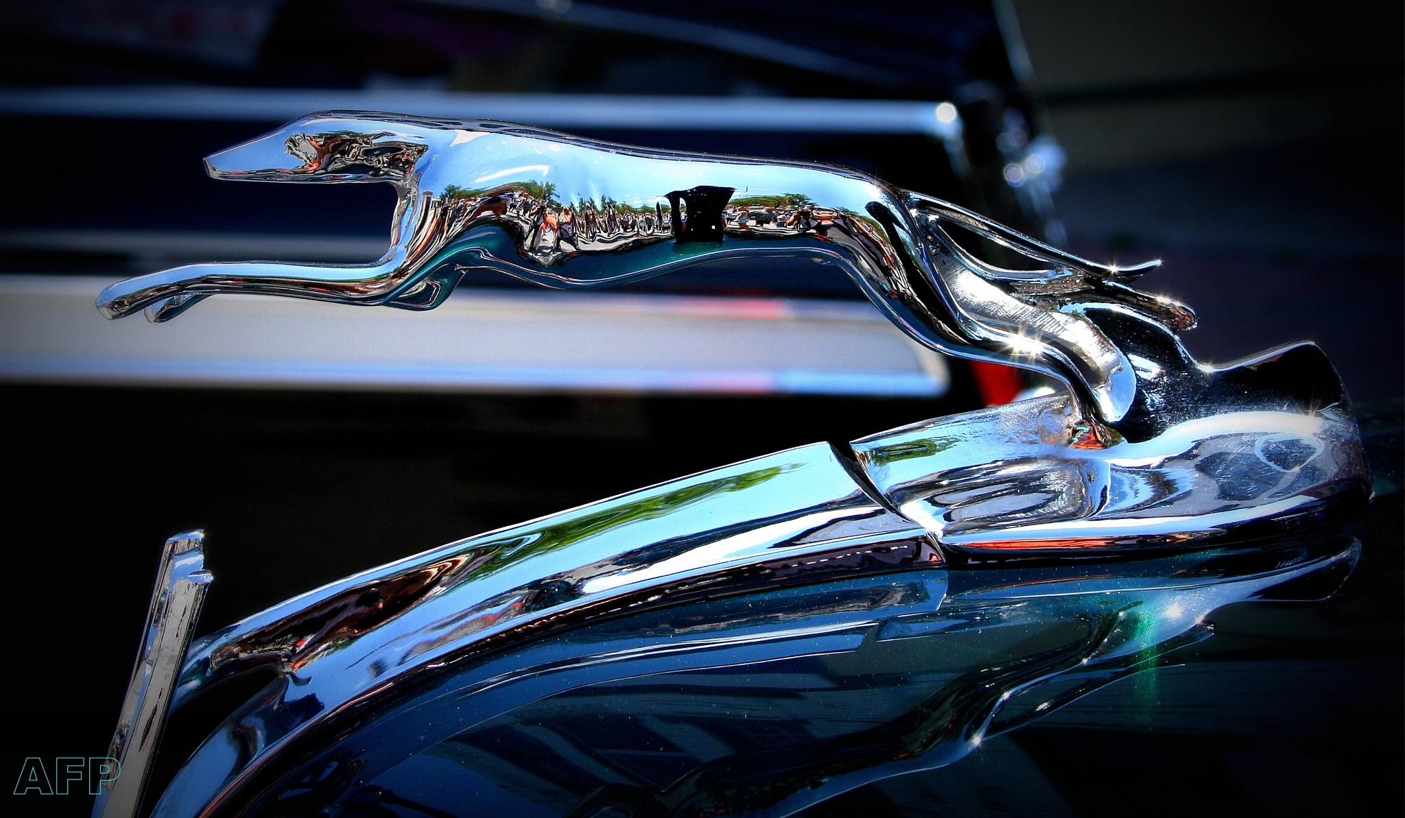 Chrome Hound by Allan Fritz
