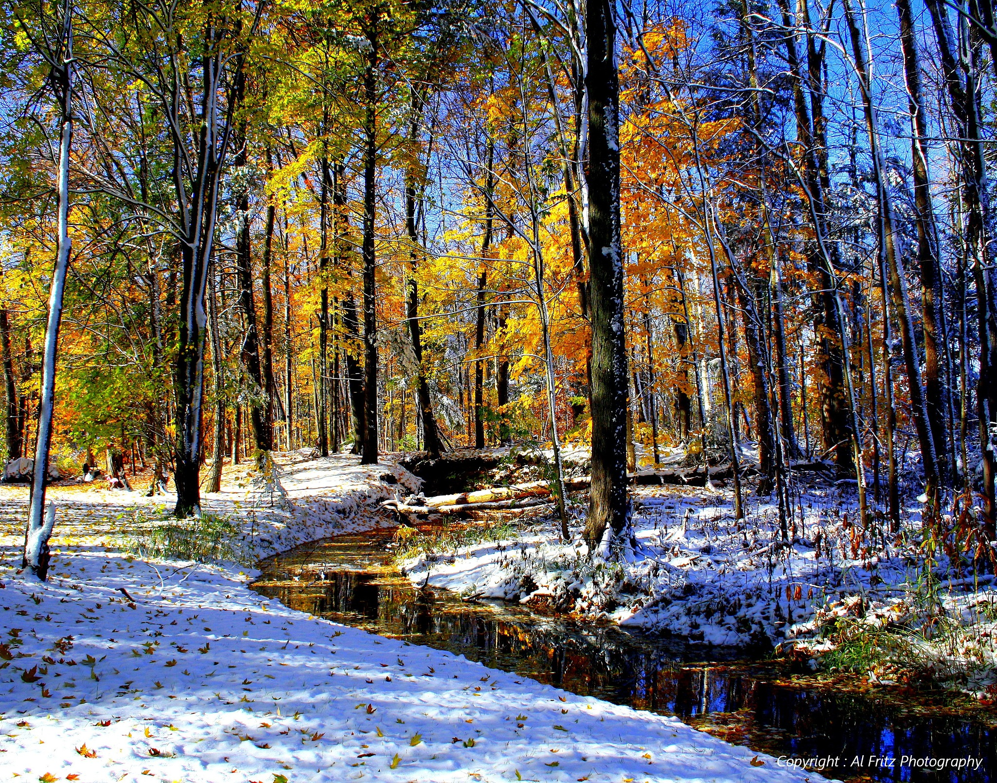 Fall into Winter by Allan Fritz