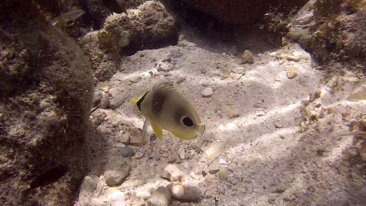 Jamaican coral fish by Larry Von Zemmrich