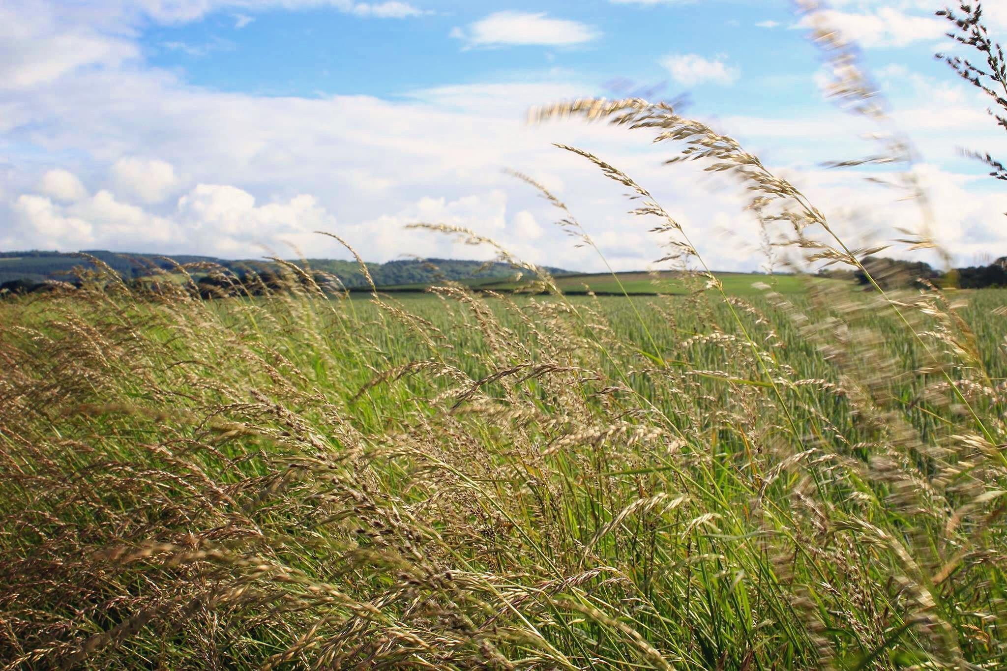 Green grass by Angela Crockford