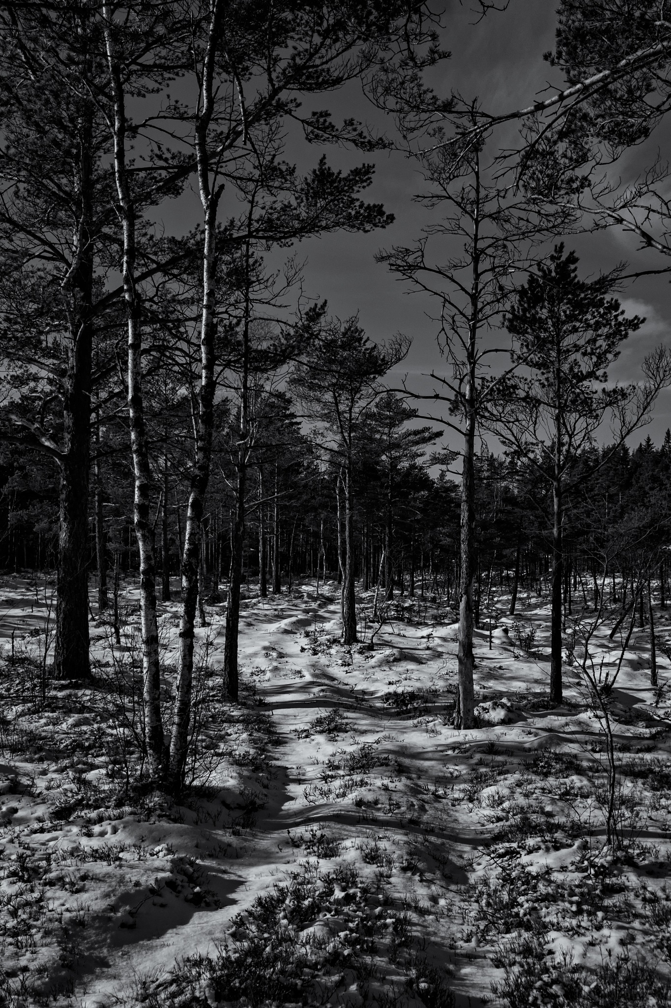 Bog forest view in b&w. by Mikael Jakobsson
