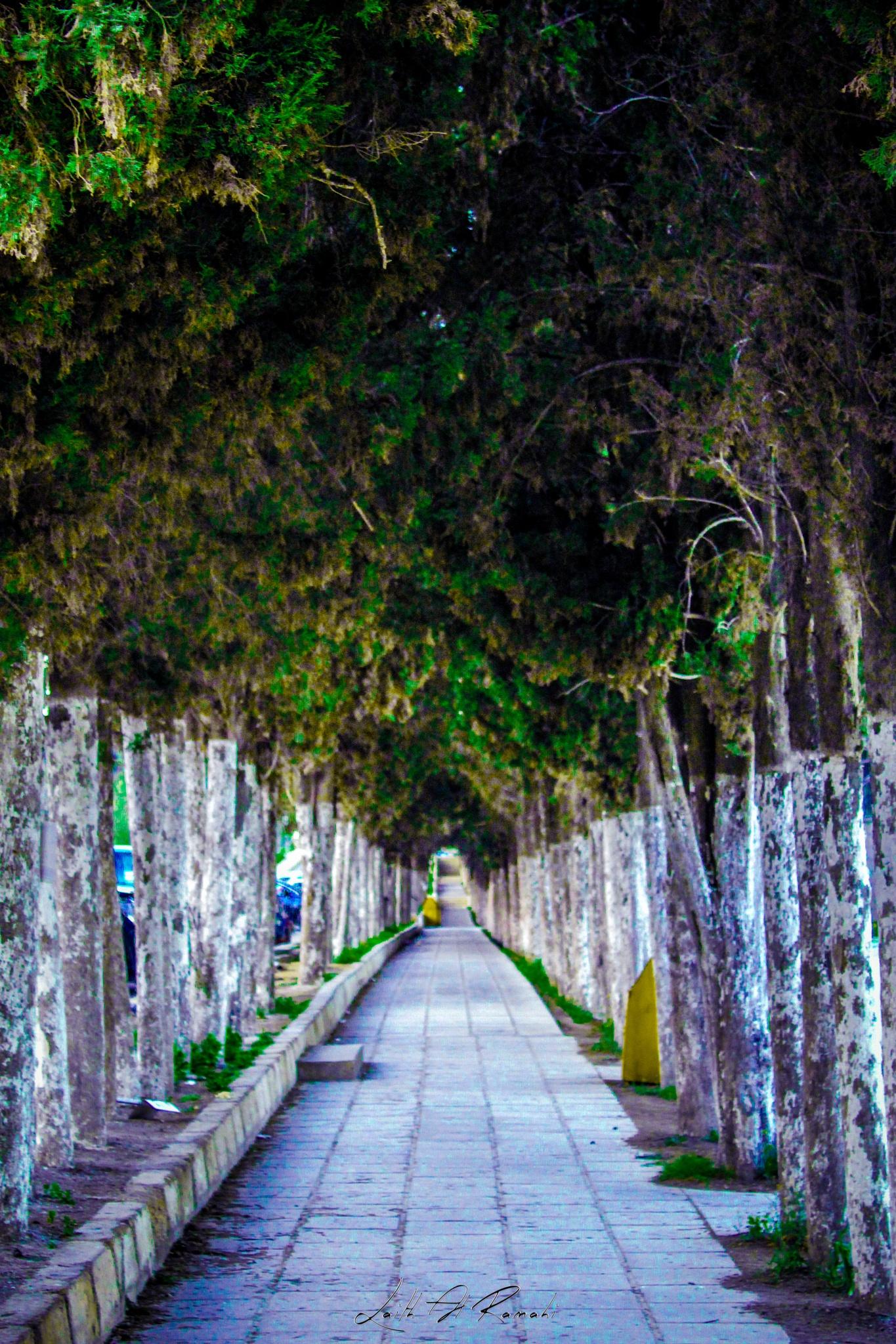 Long way .. by Laith Al-Ramahi