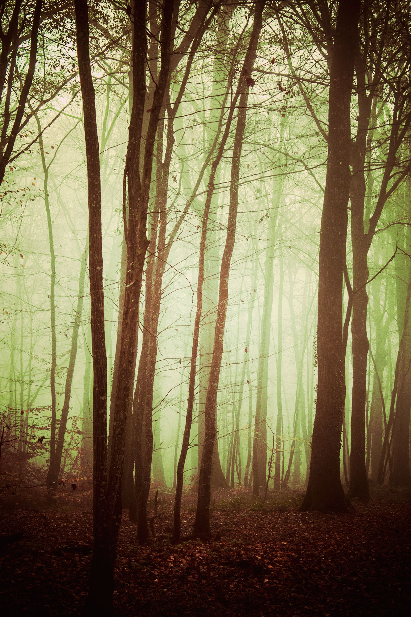 There's always a light at the end of the... woods! by AnneCecile Graphic
