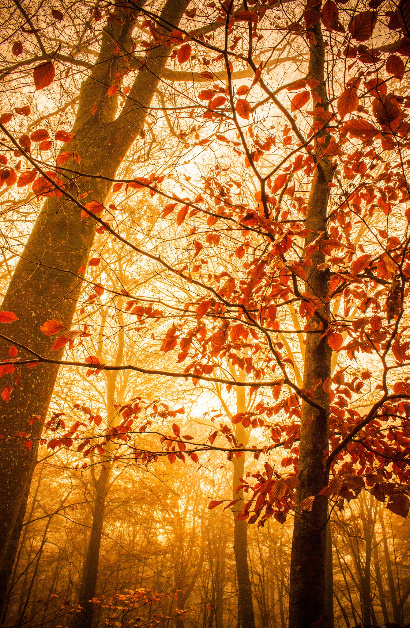 The last red leaves in the forest... by AnneCecile Graphic
