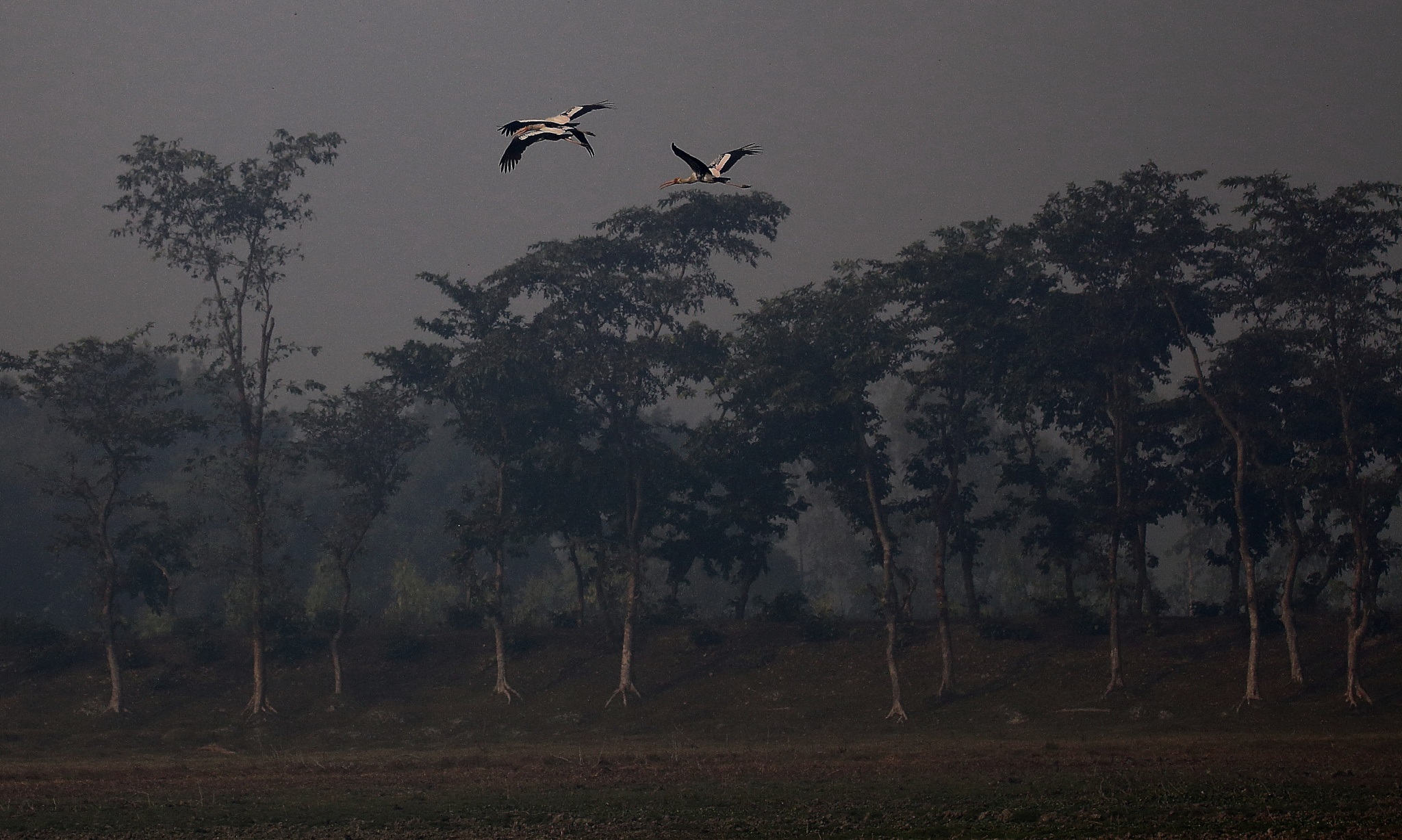 Untitled by Jayant Mathur
