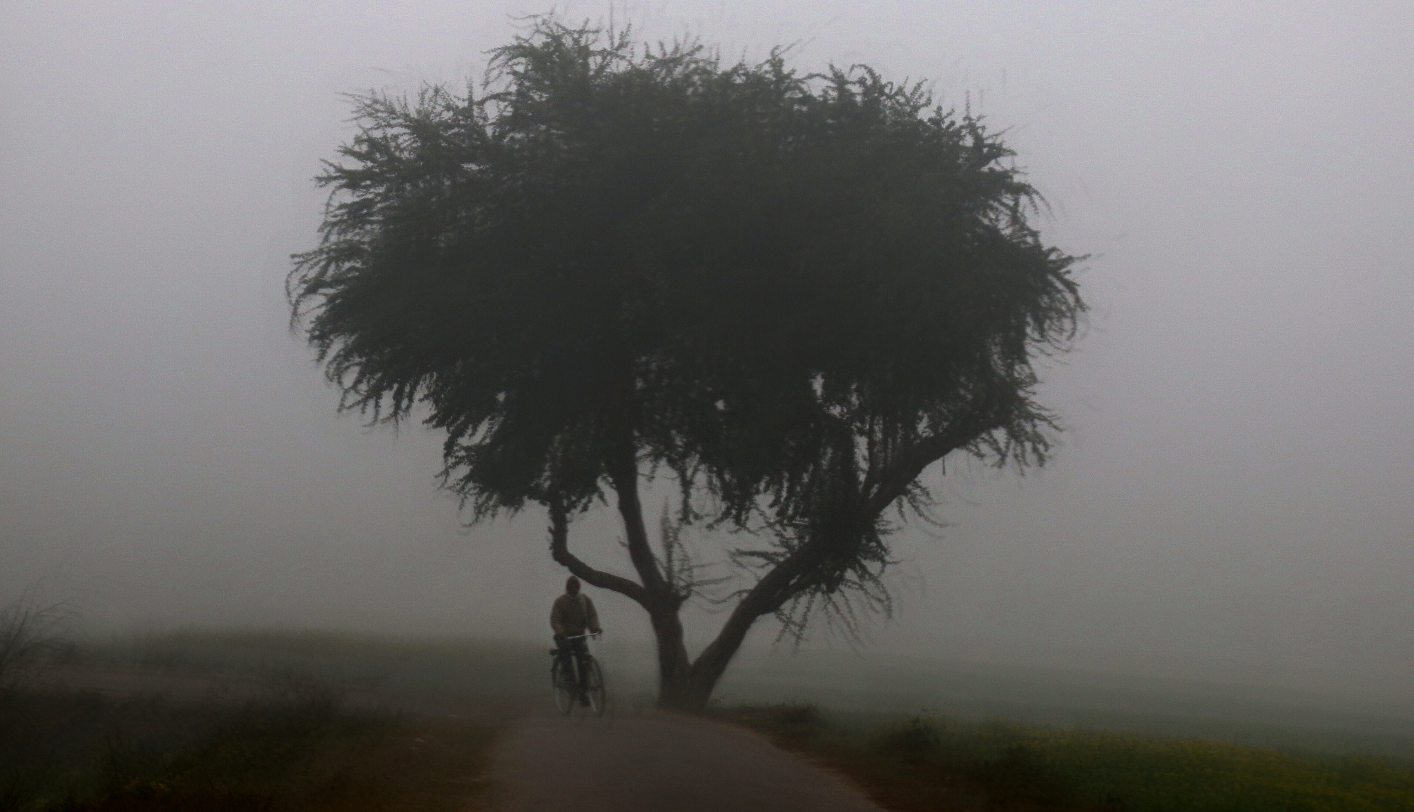 foggy morning by Jayant Mathur