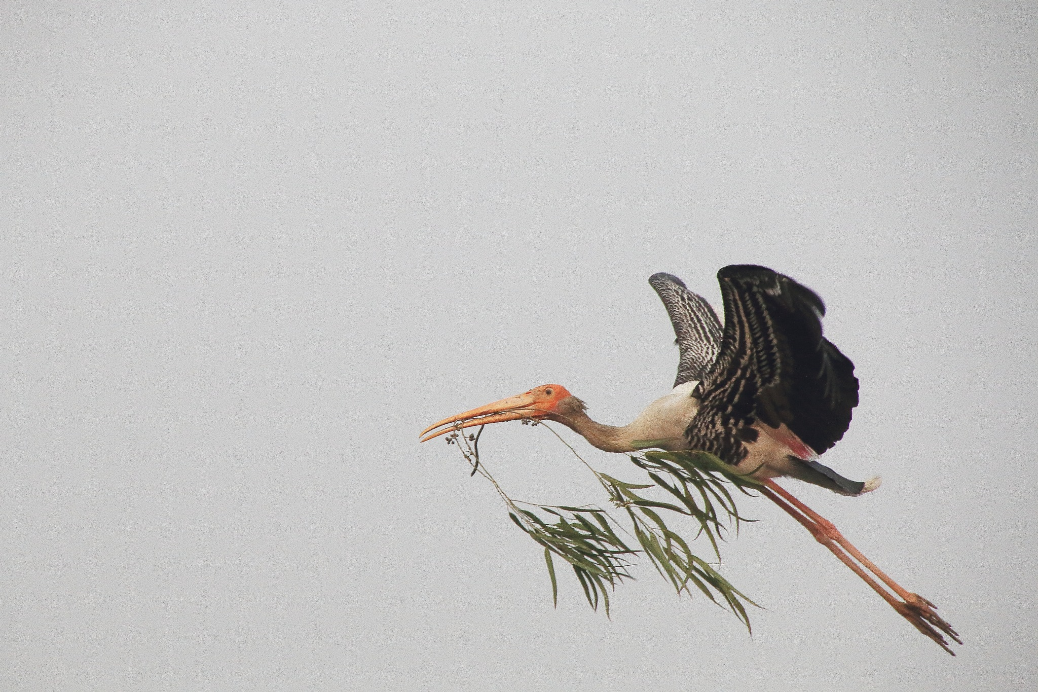 PAINTED STORK by Jayant Mathur