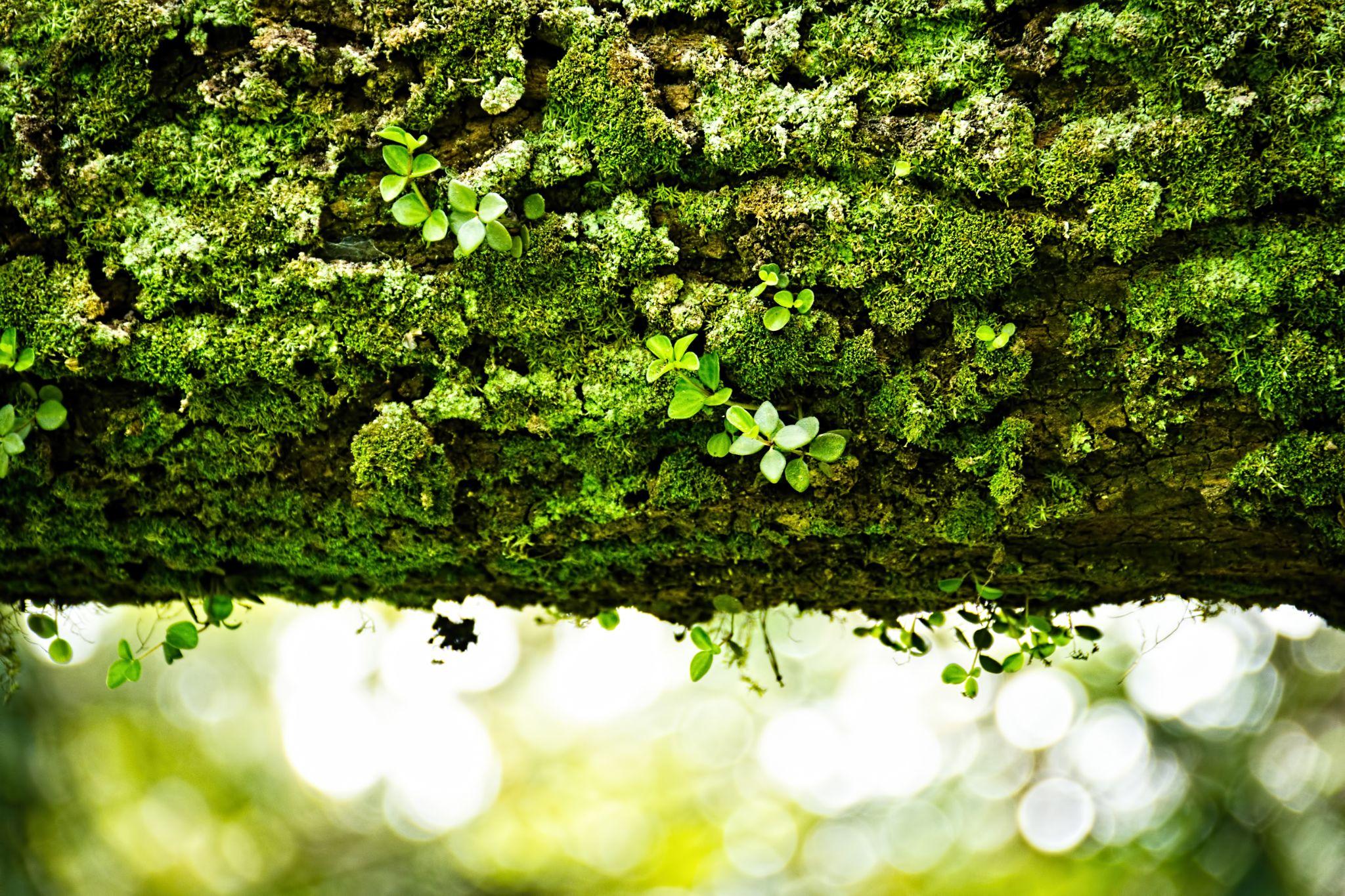 Tree bark. by Prem Swarup