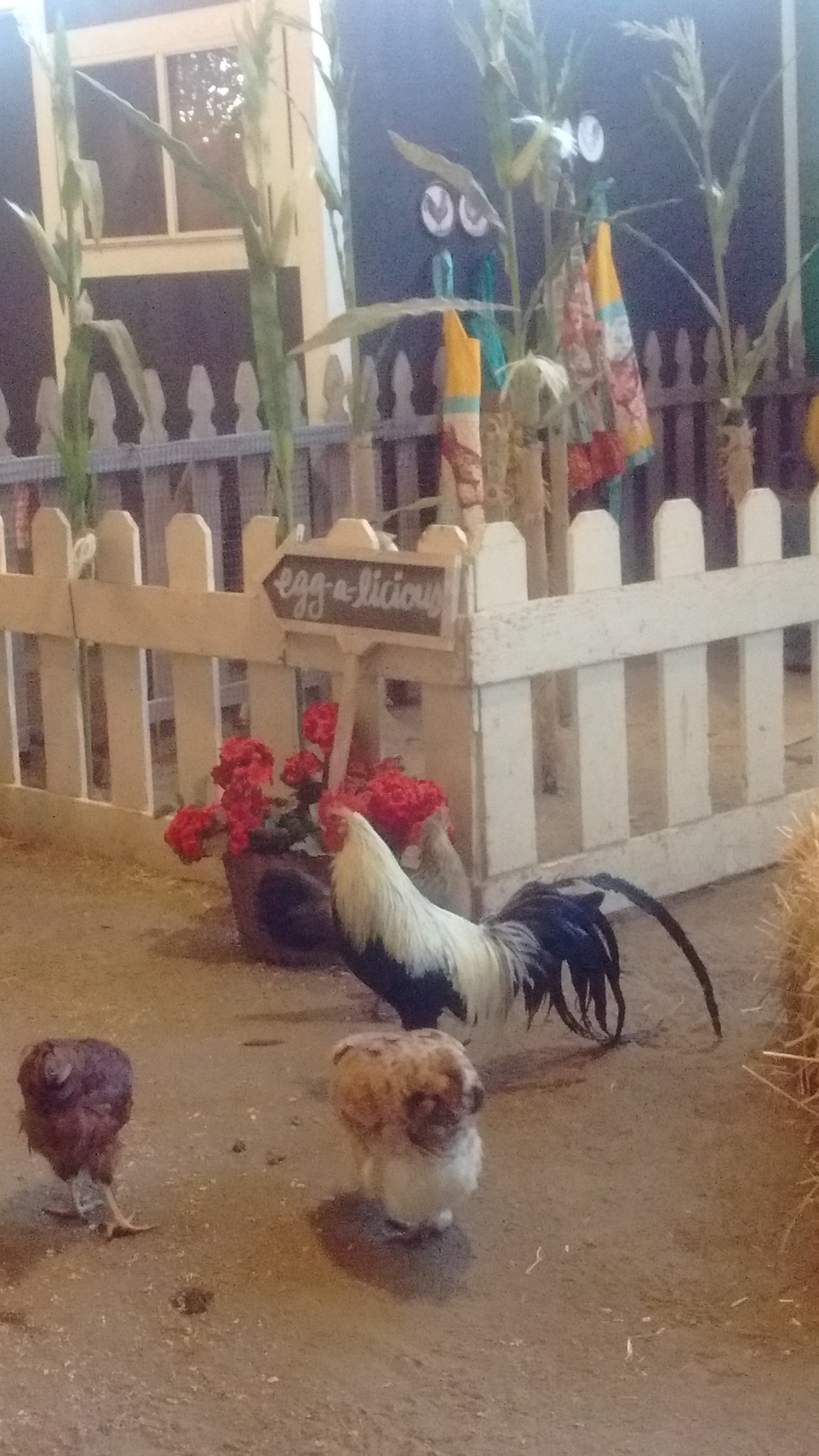 Chickens! by Valerie Hall