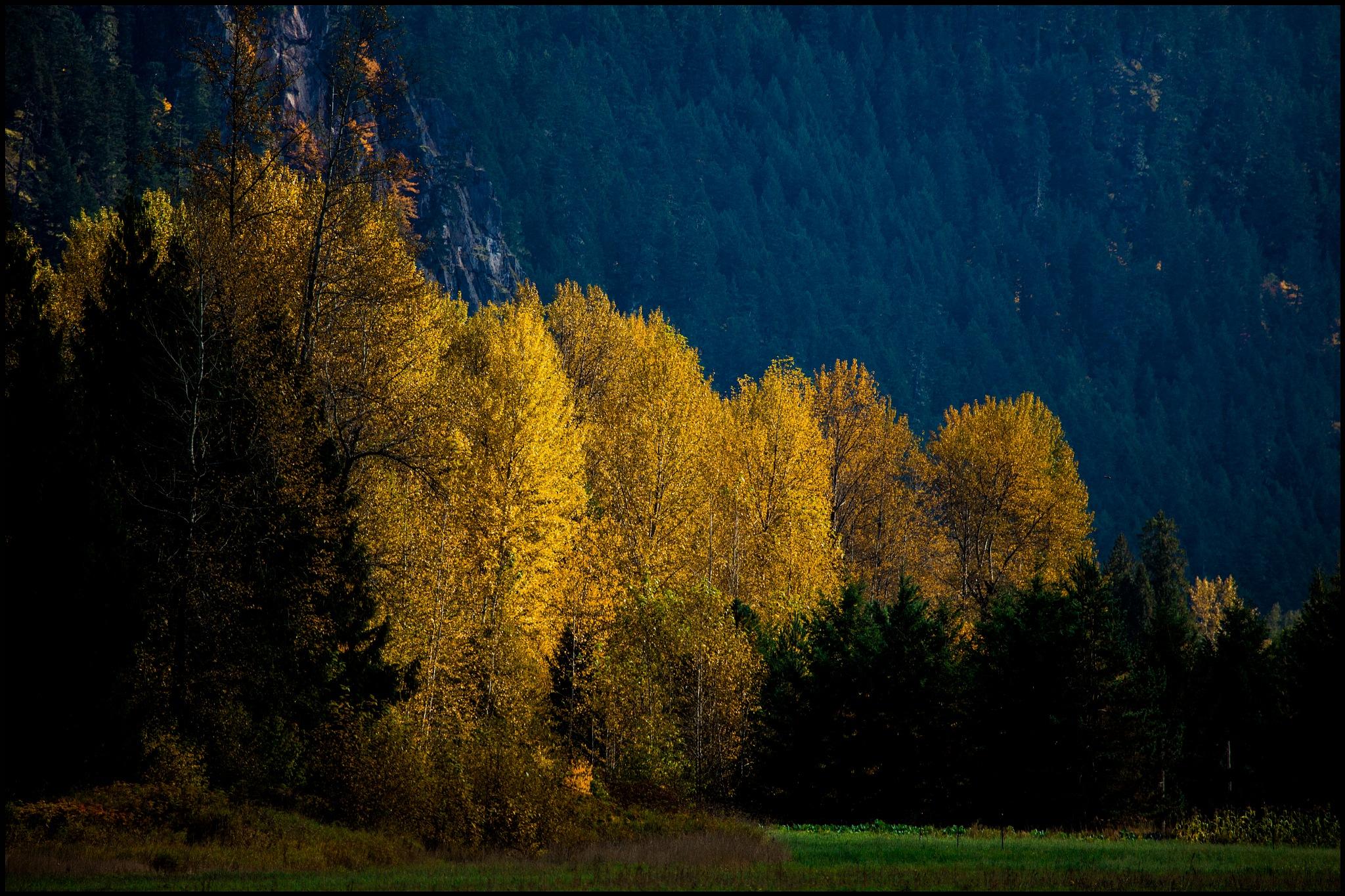Fall in the Valley by Alwyn Kumst