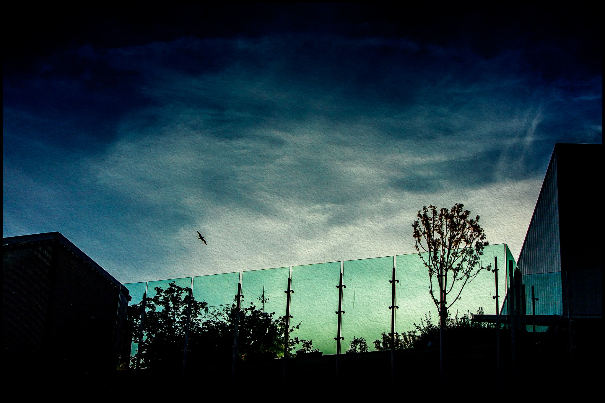 Bird and Glass by Alwyn Kumst