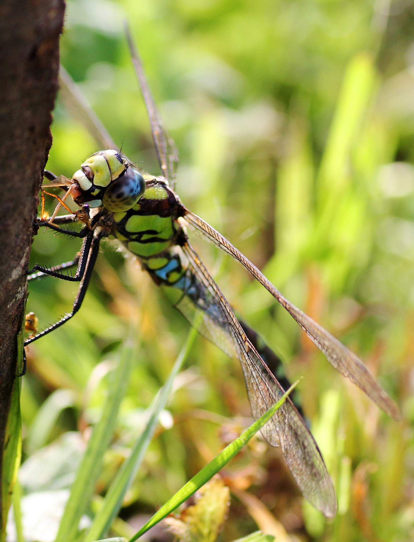 Dragonfly by Chris Kilpatrick