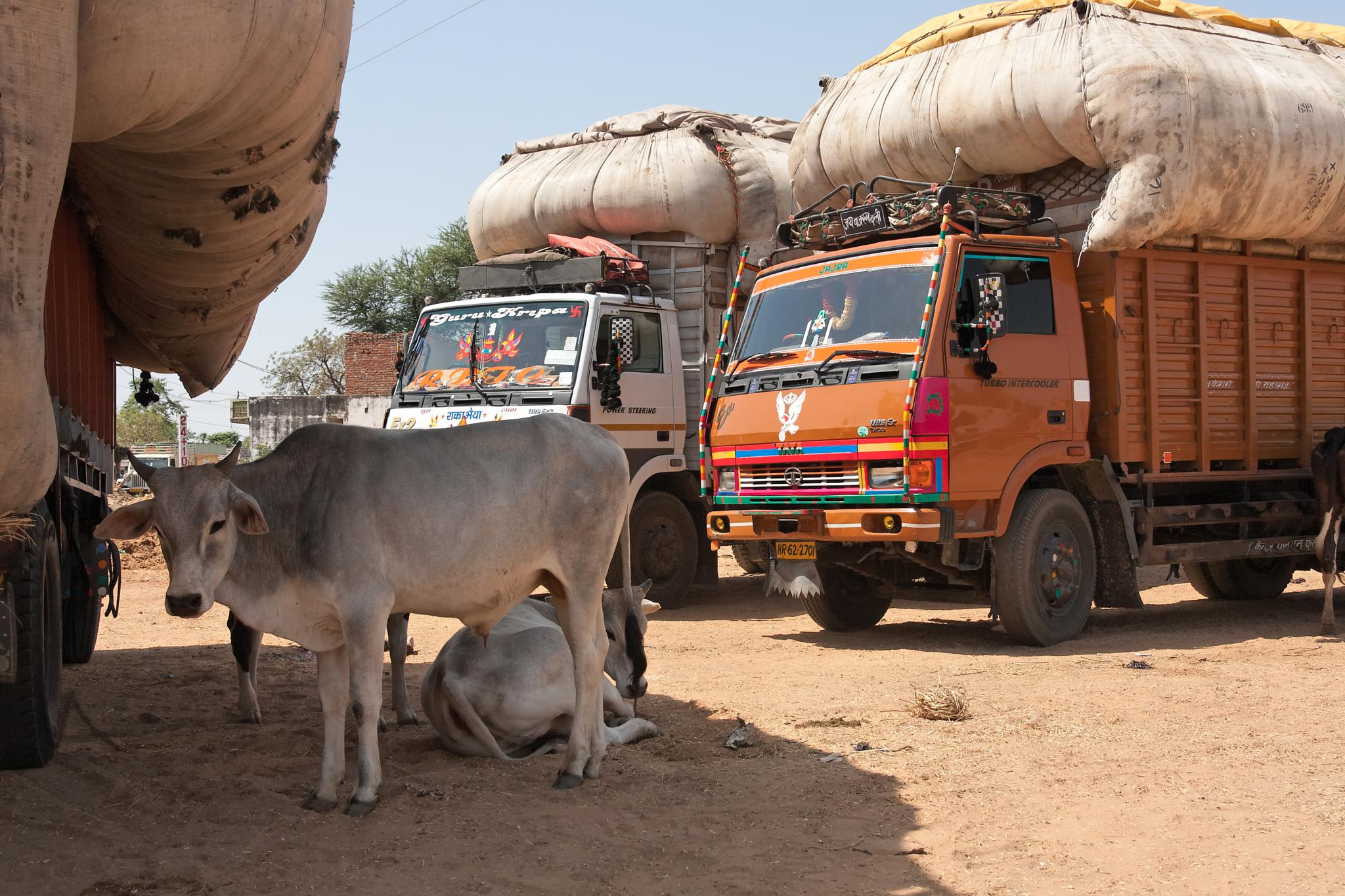 Cotton trucks in India by Patrice Sarzi