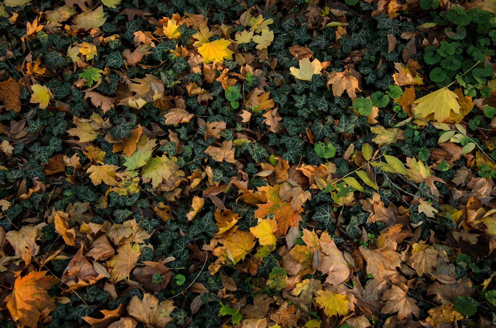 Fallen autumn leafs by George Enciu