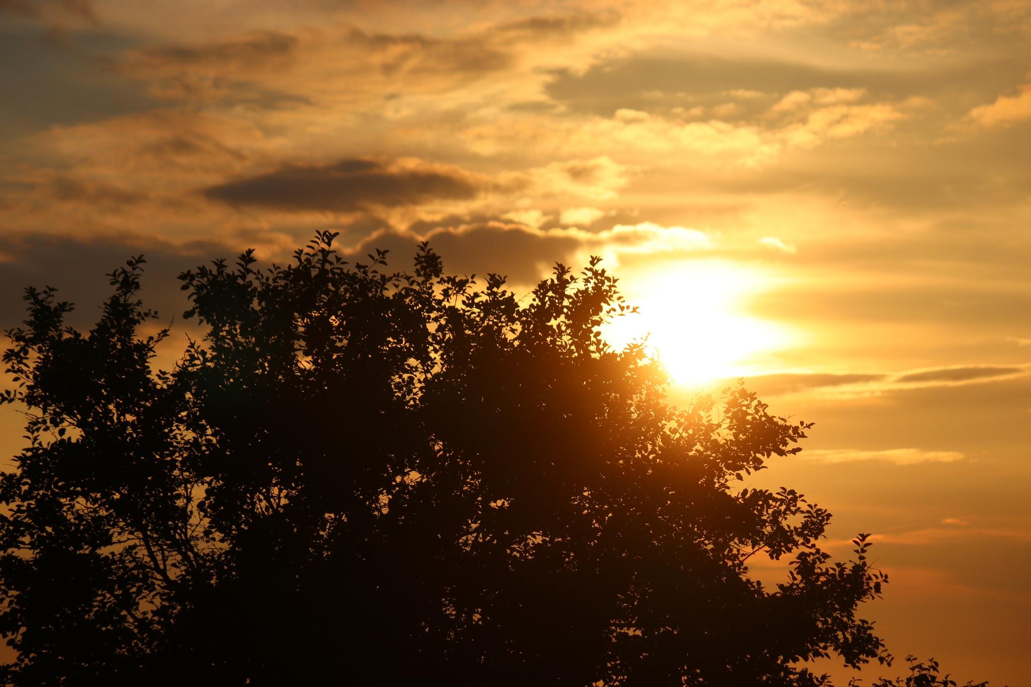 sunset tree by Jojophotography