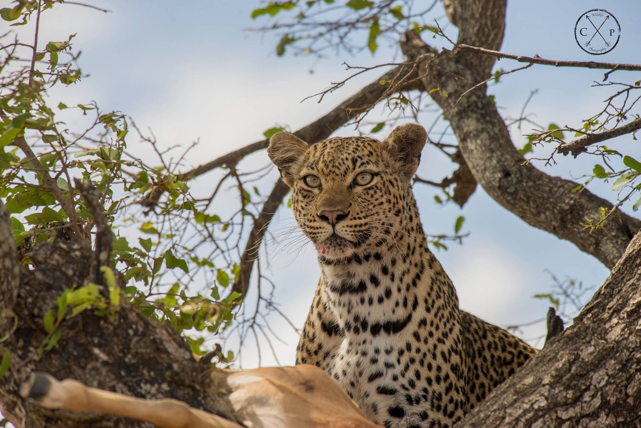 Kruger National Park by CPWildlifePhotography