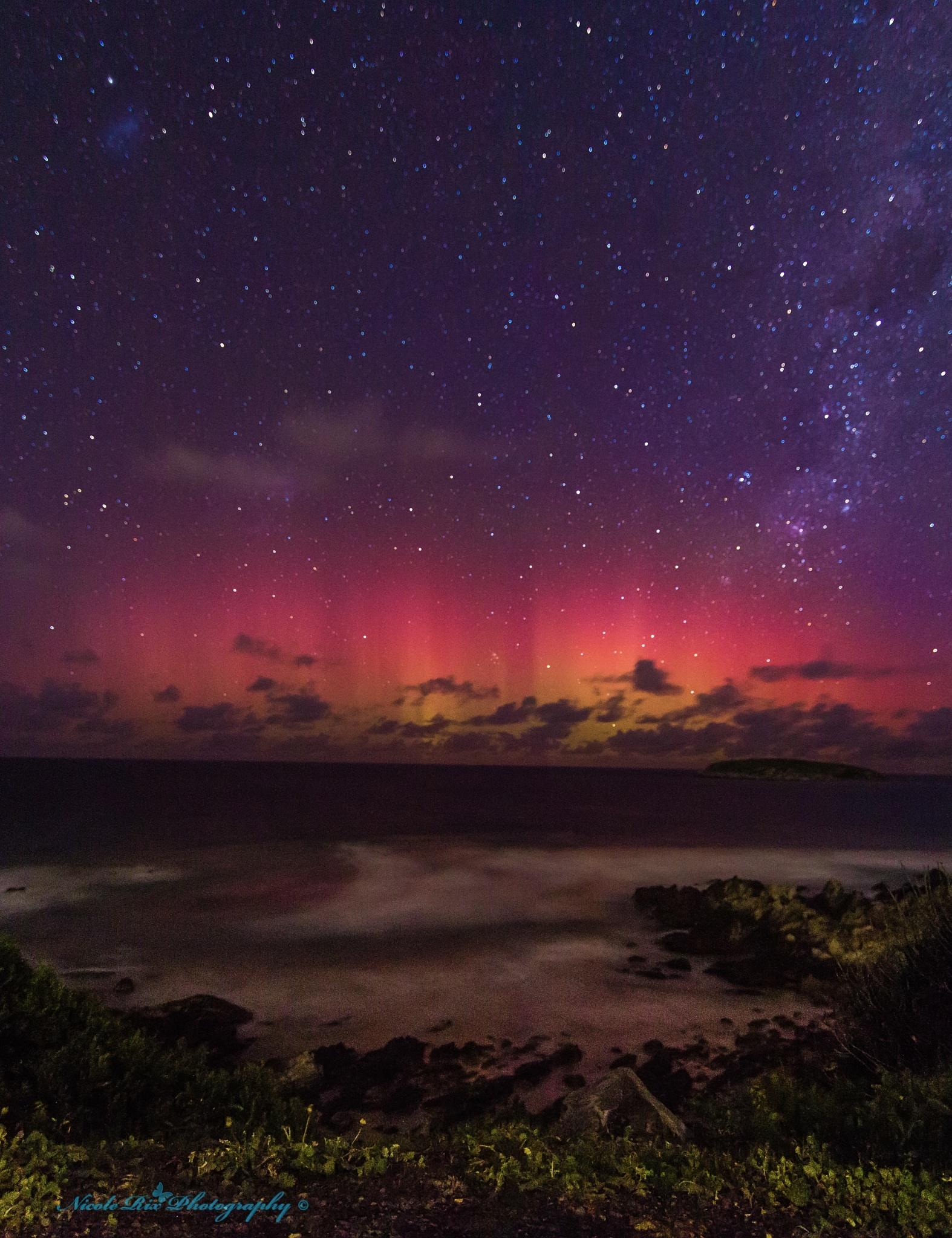 Aurora at the Petrel Cove by Nicole Rix