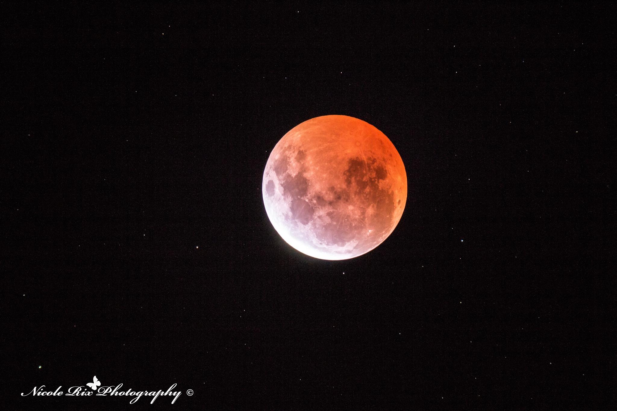 Blood Moon by Nicole Rix