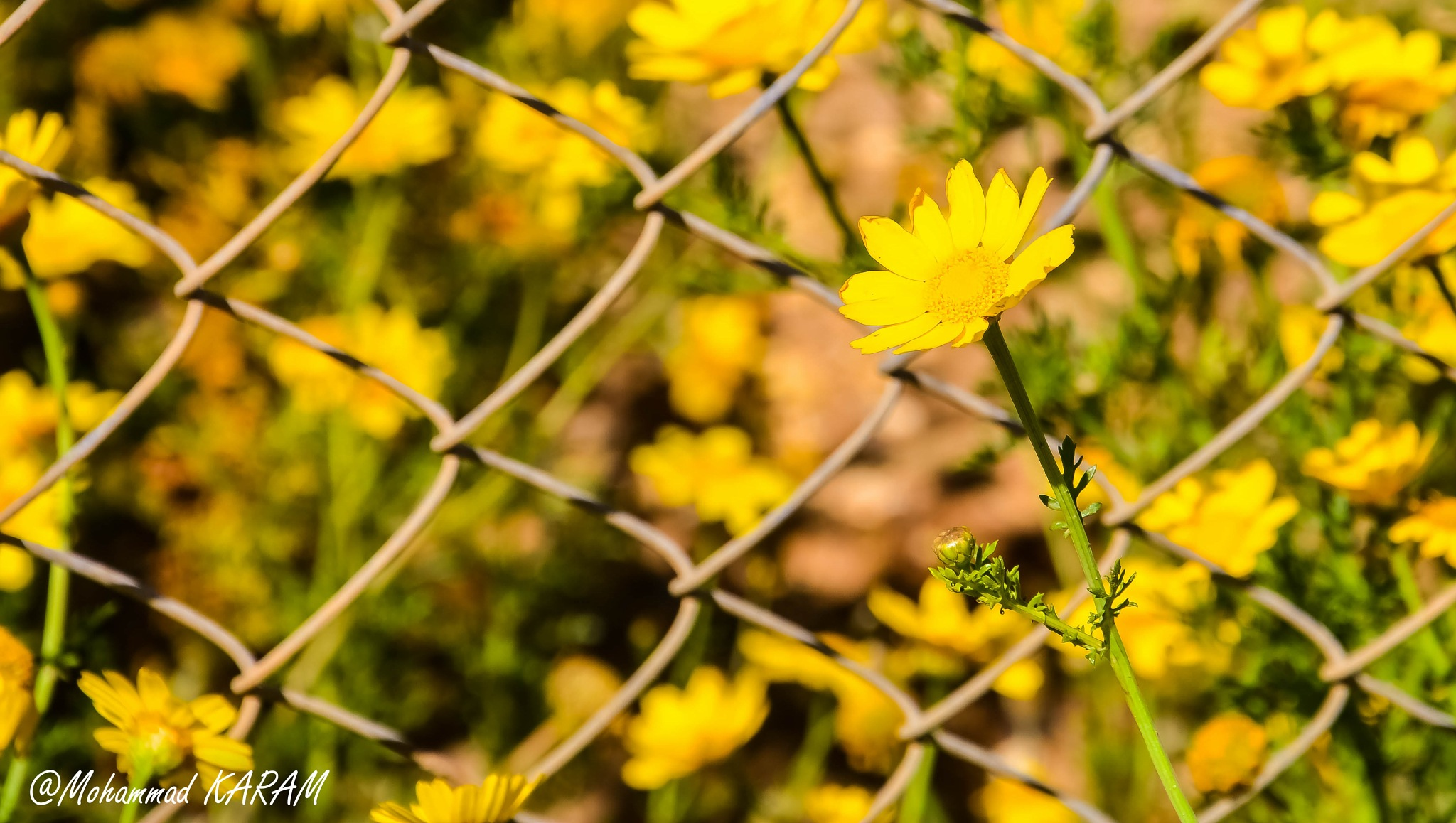 In front if the Fence... by Mohammad Karam