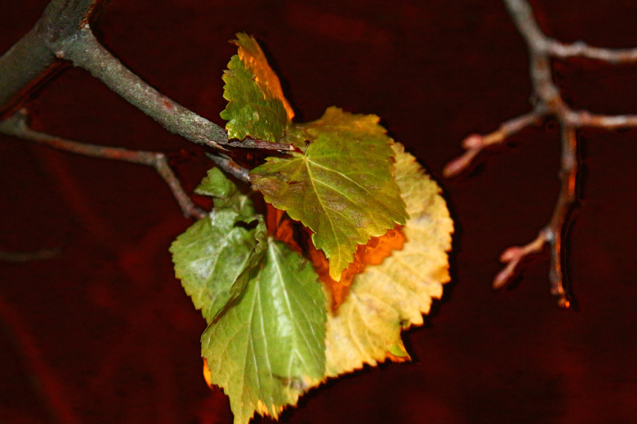 last green leaves.... by Iryna150680