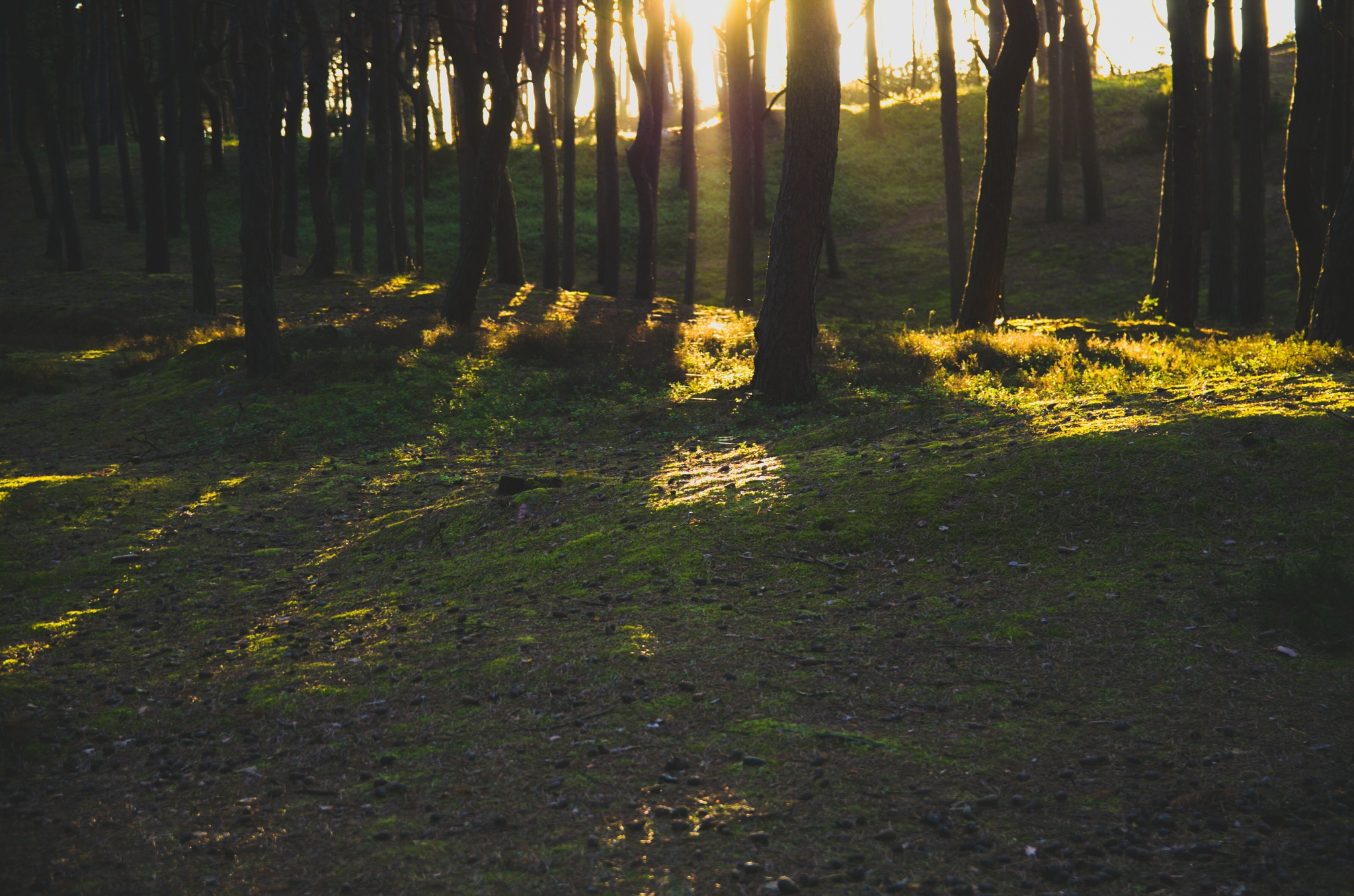 Sunset in the Forest  by Paweł