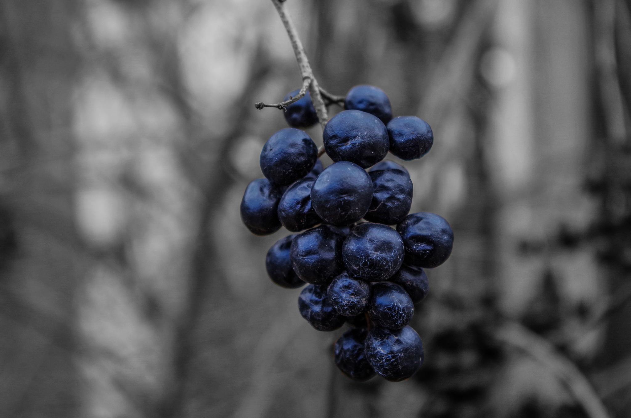 Elderberries by Paweł