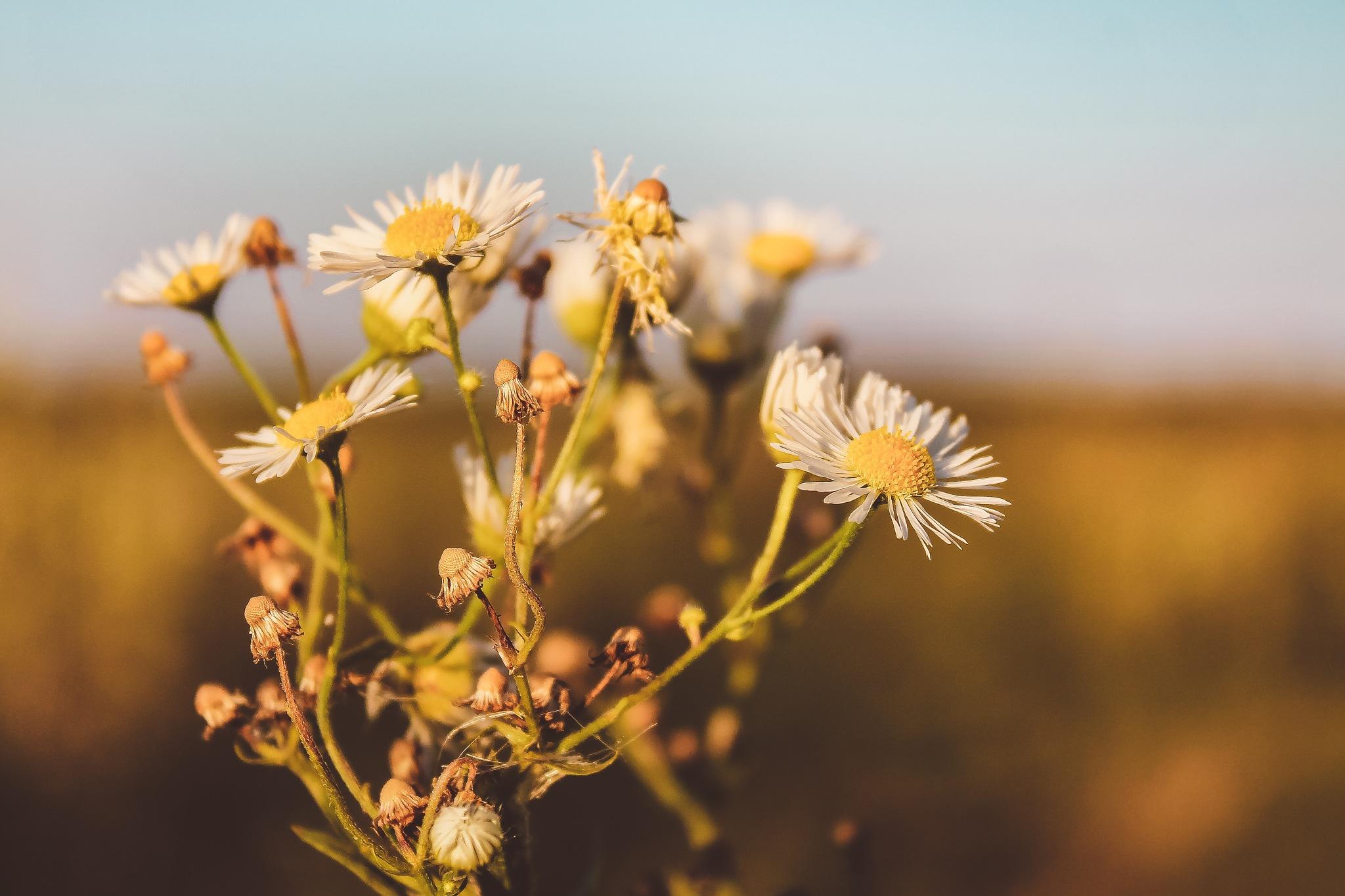 Flowers by Tamás Fóris