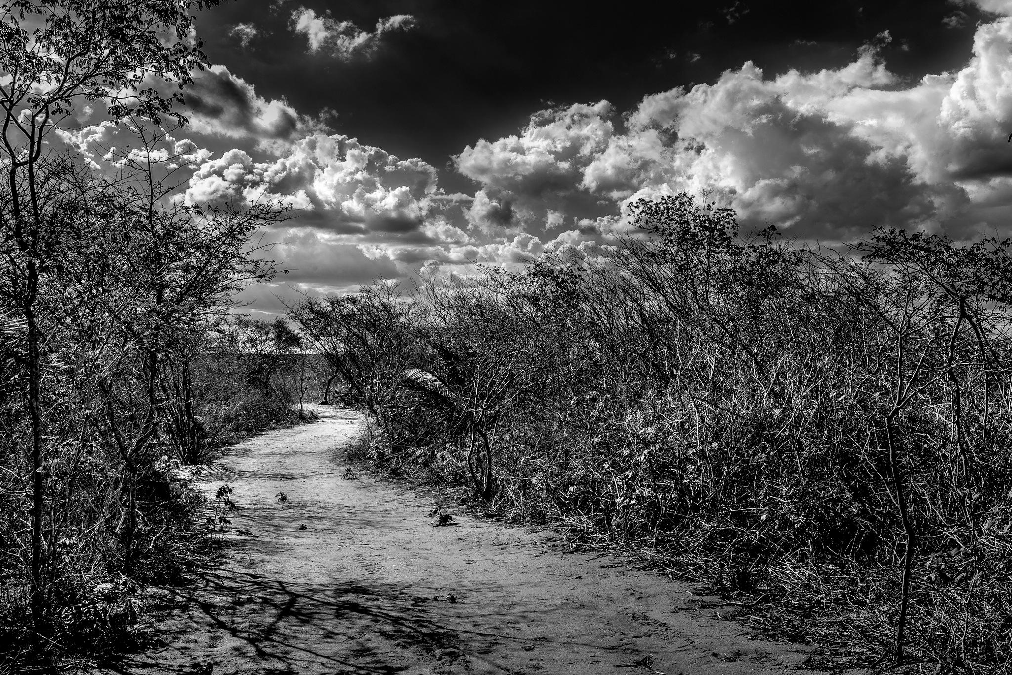 Caatinga Pathway by EROliveira