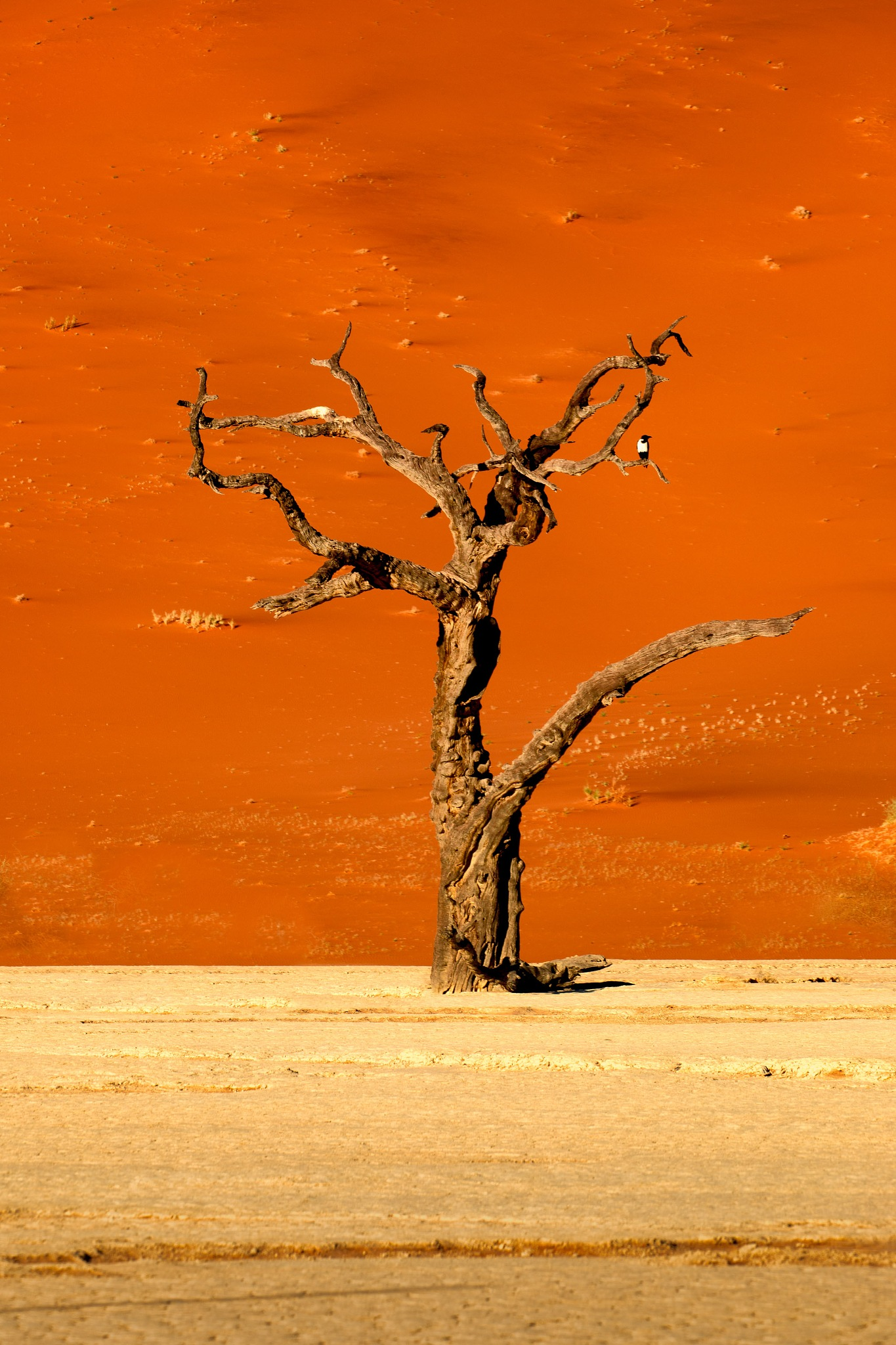 The Deadvlei Tree and the Magpie by Iain McLean