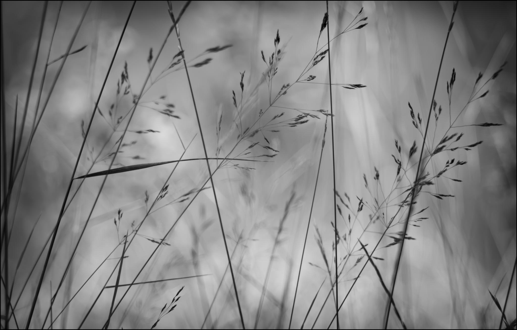 On the meadow by Zoran Radakovic