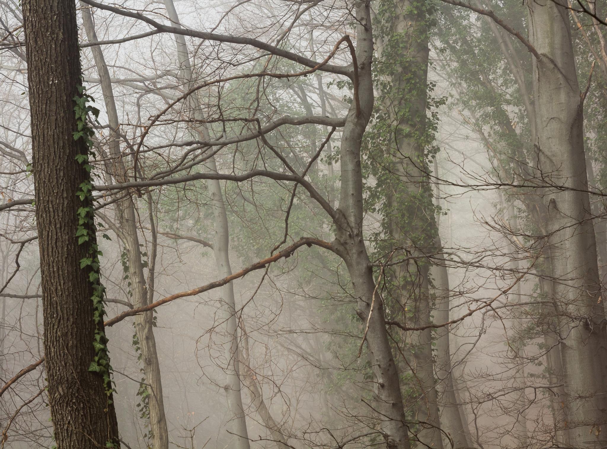 Woods by Zoran Radakovic