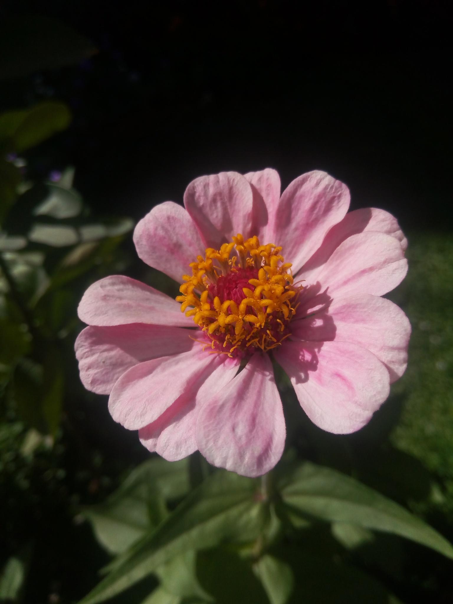 flower by Bahjat Ali