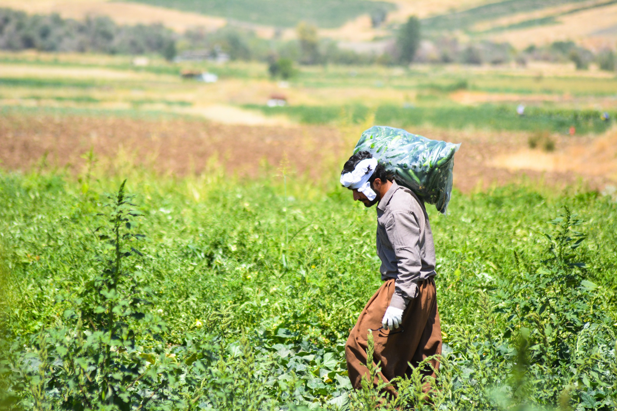 a farmer exhausted  by Ibrahim Gharib