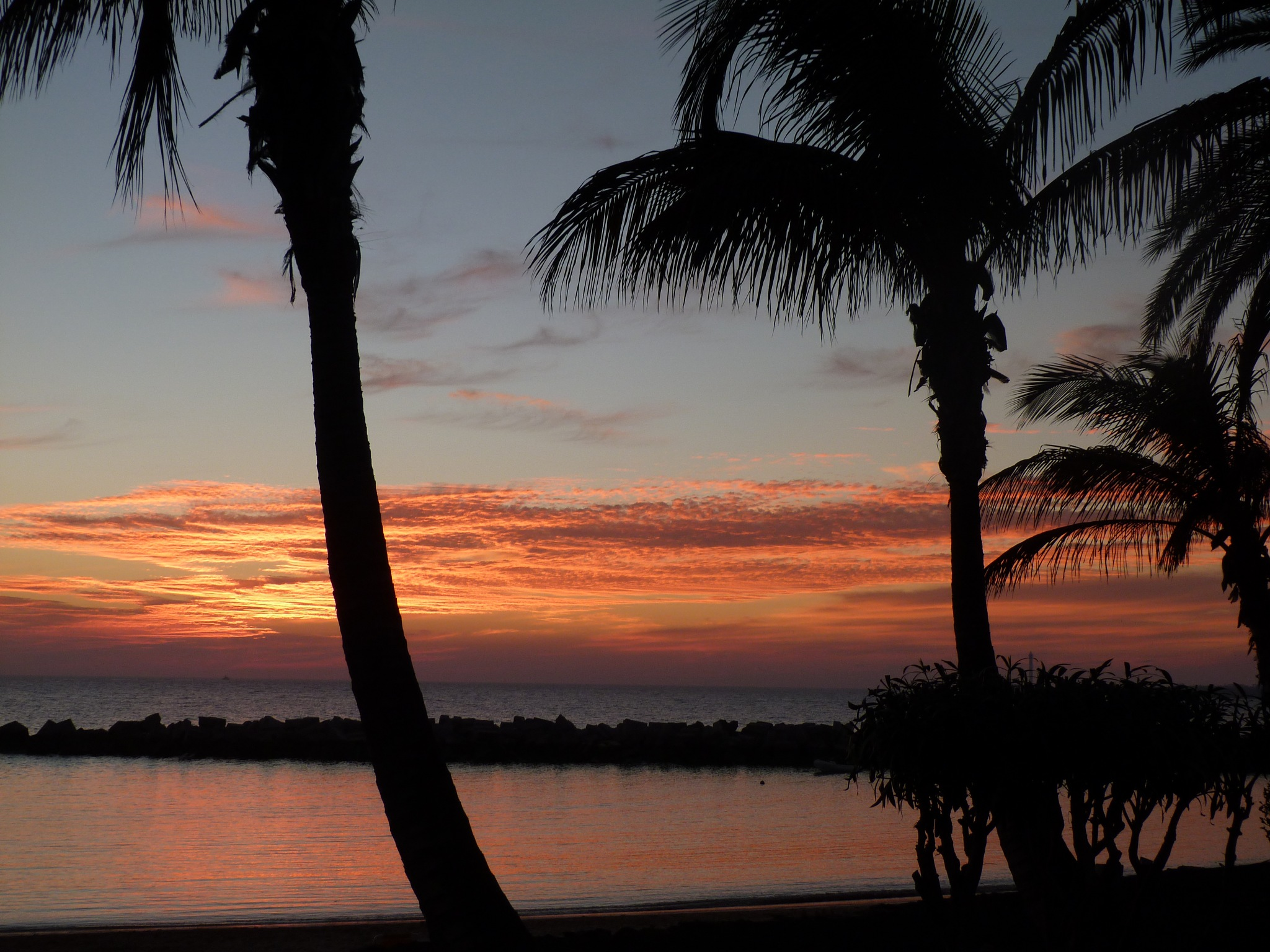 Sunset through the palms by Launa