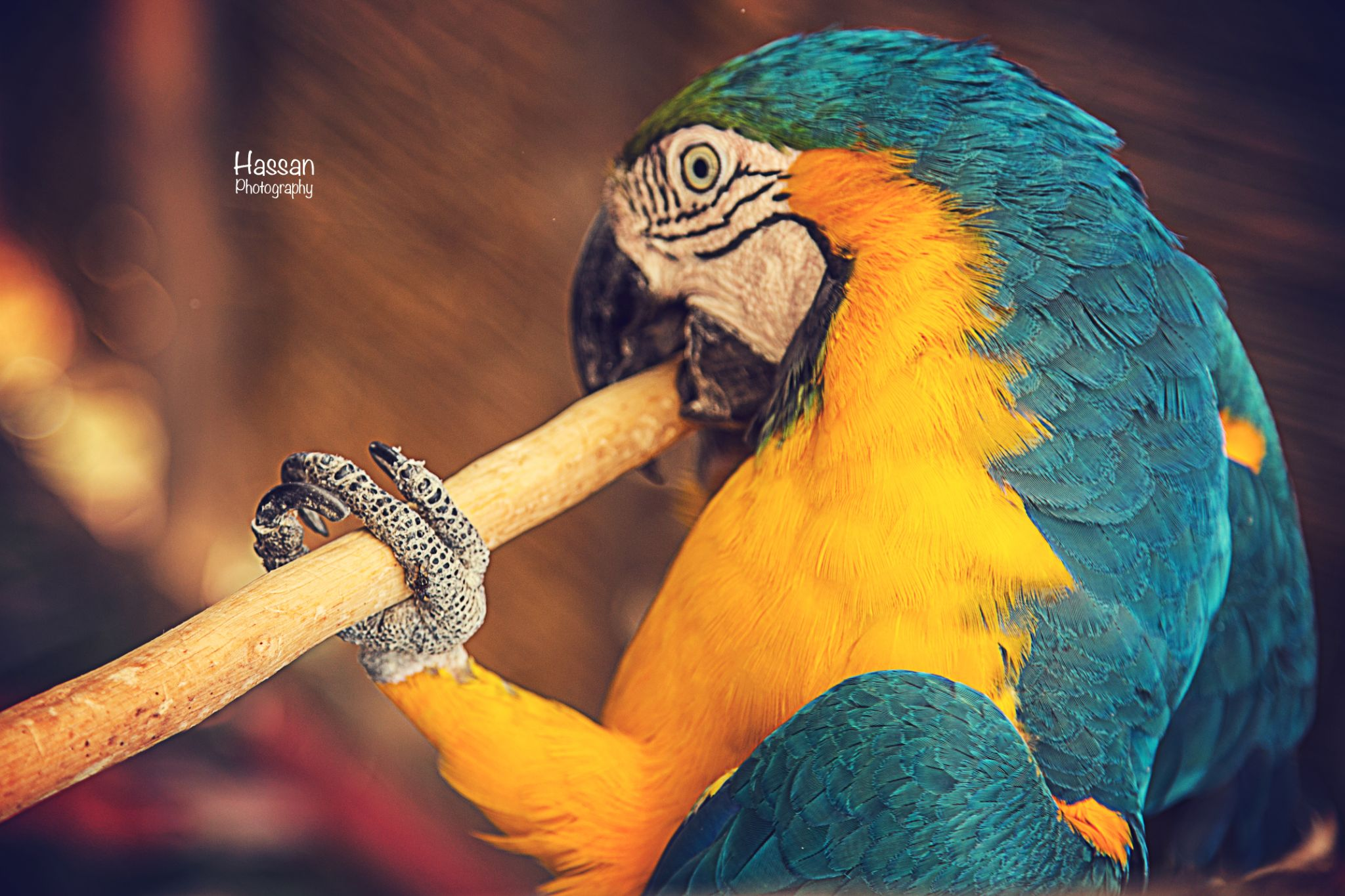 The flute by Hassan Elbarbary