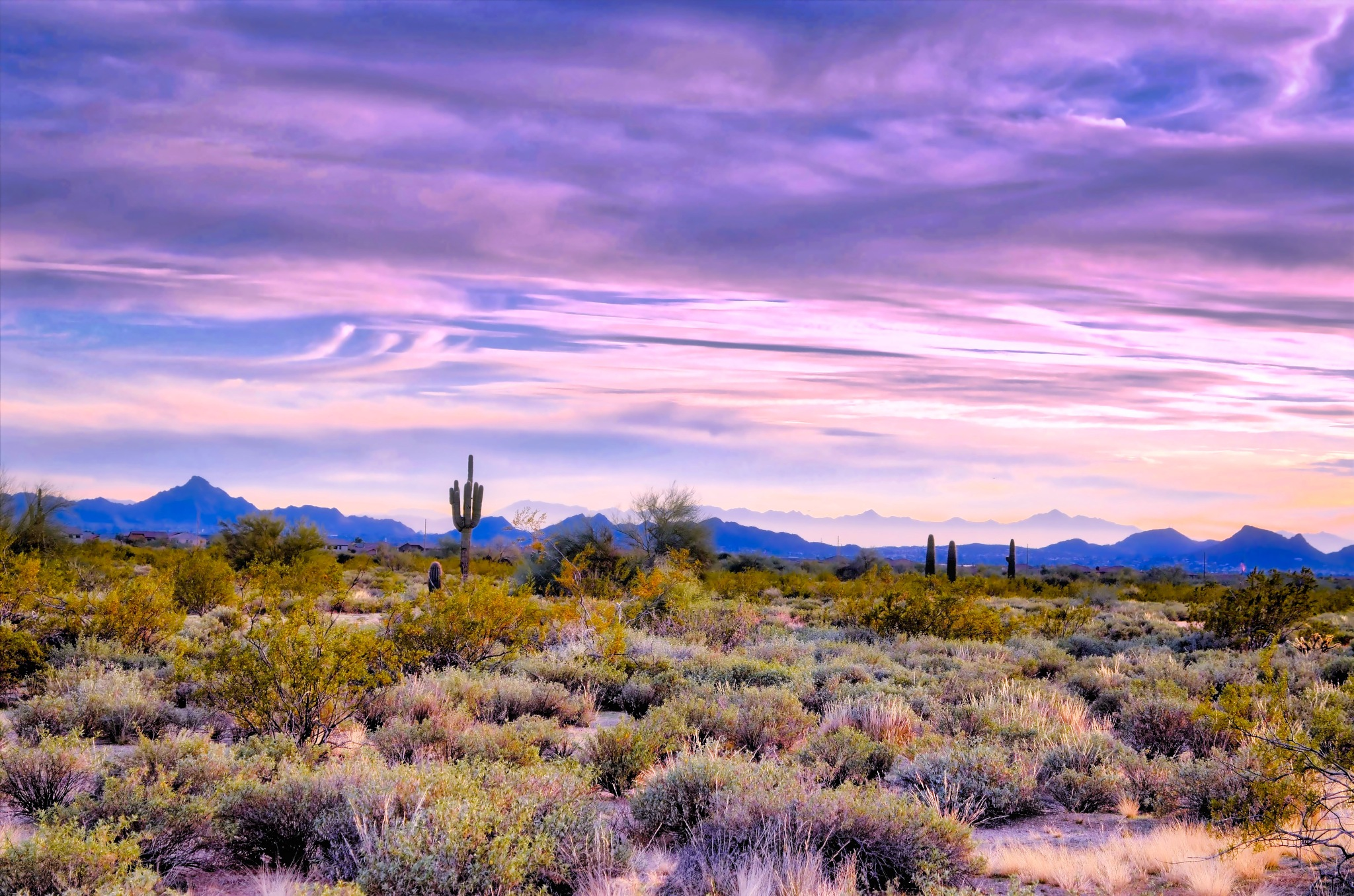 Arizona Desert by Harrison Hanville