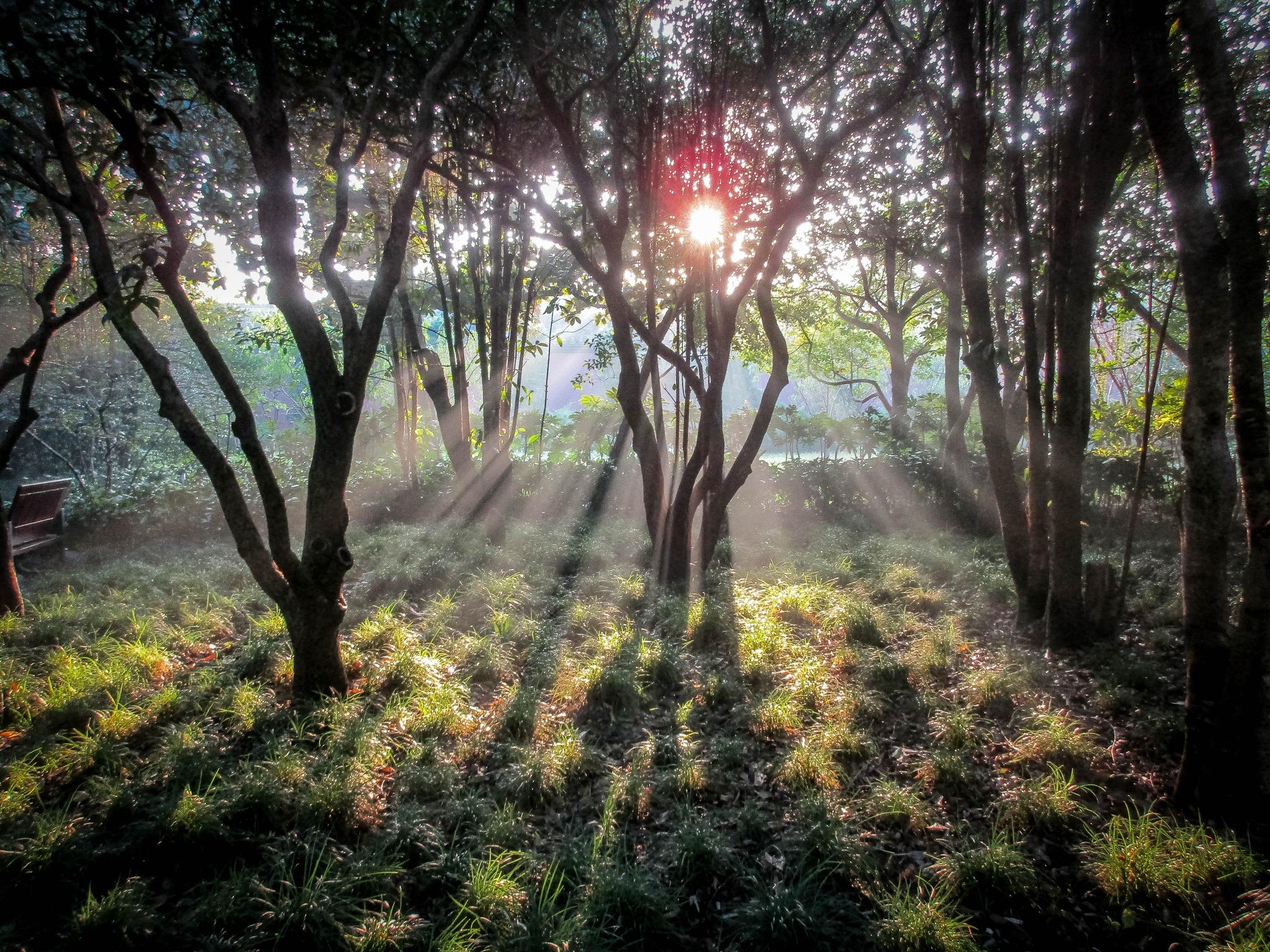Morning Light  by Robert Borden