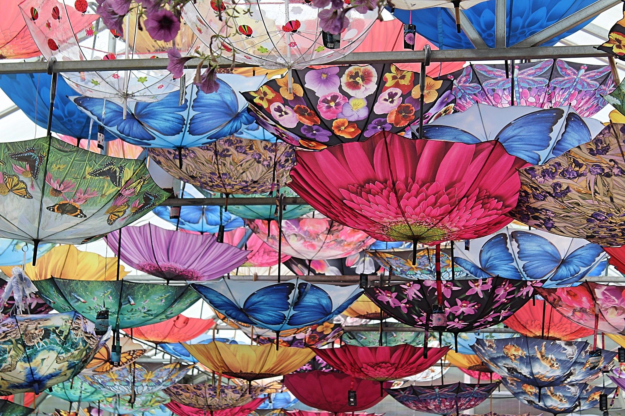 Umbrellas by Robert Borden