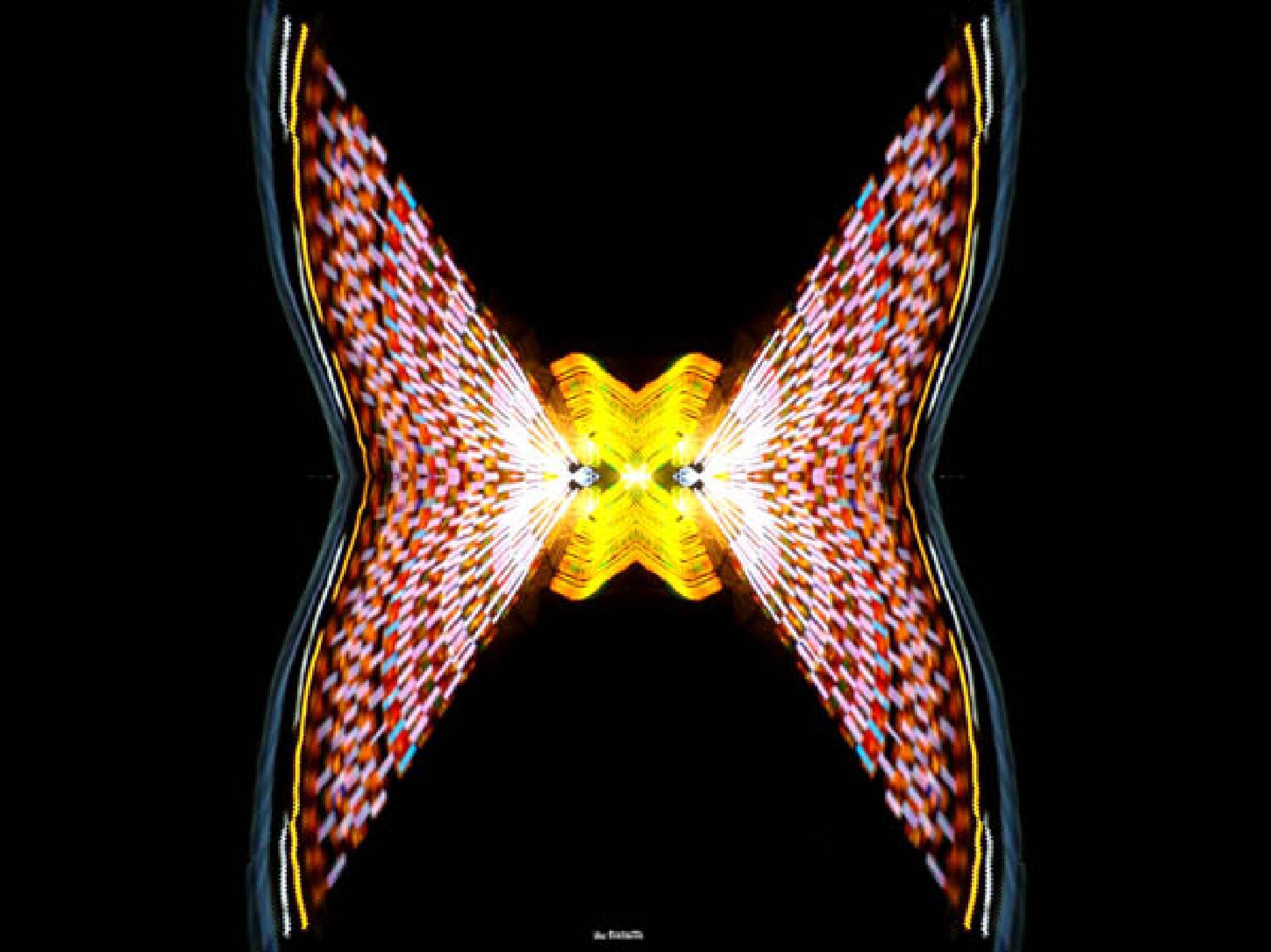Butterfly by f5.6 artstreet