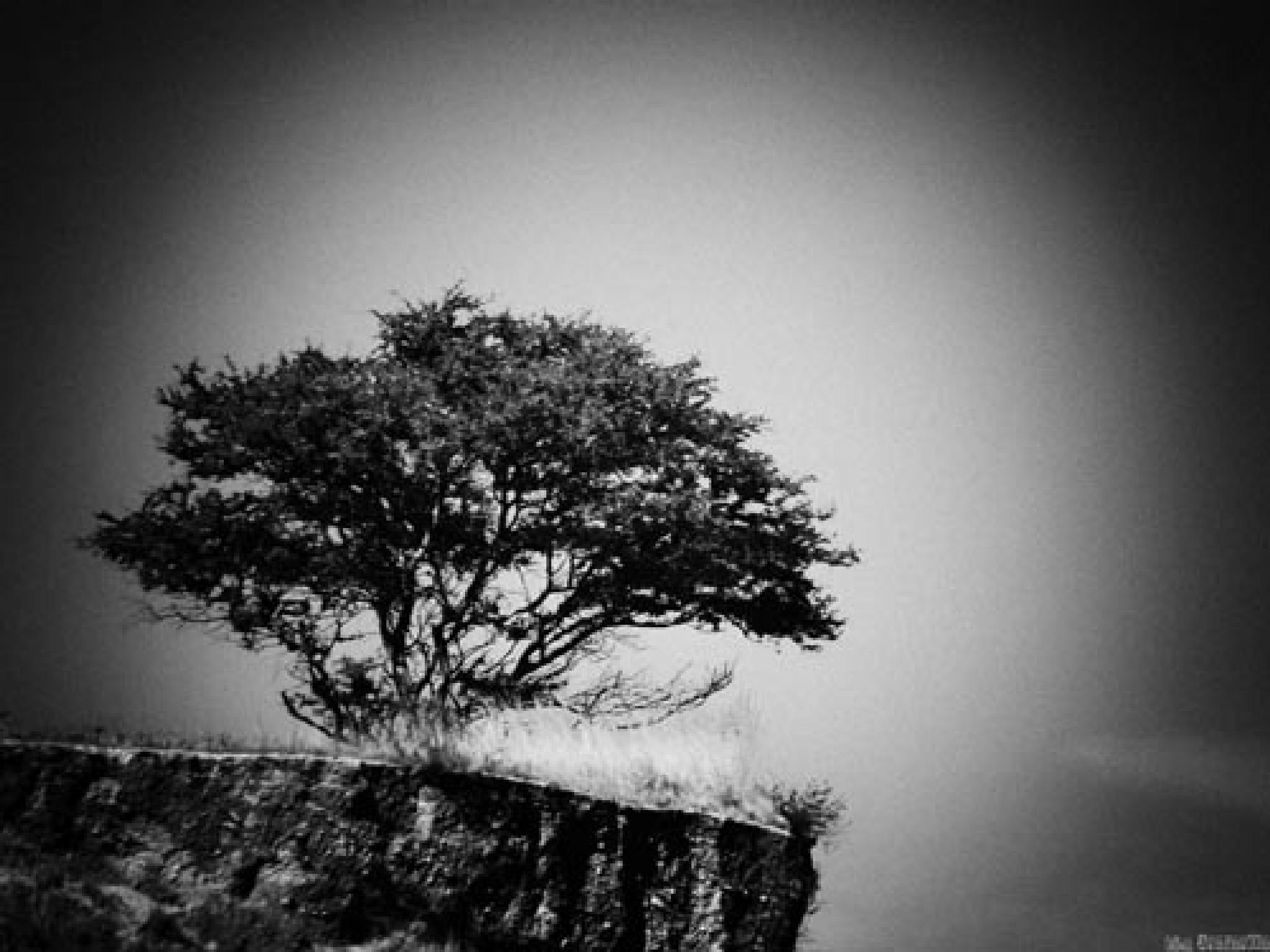 a memory tree by f5.6 artstreet